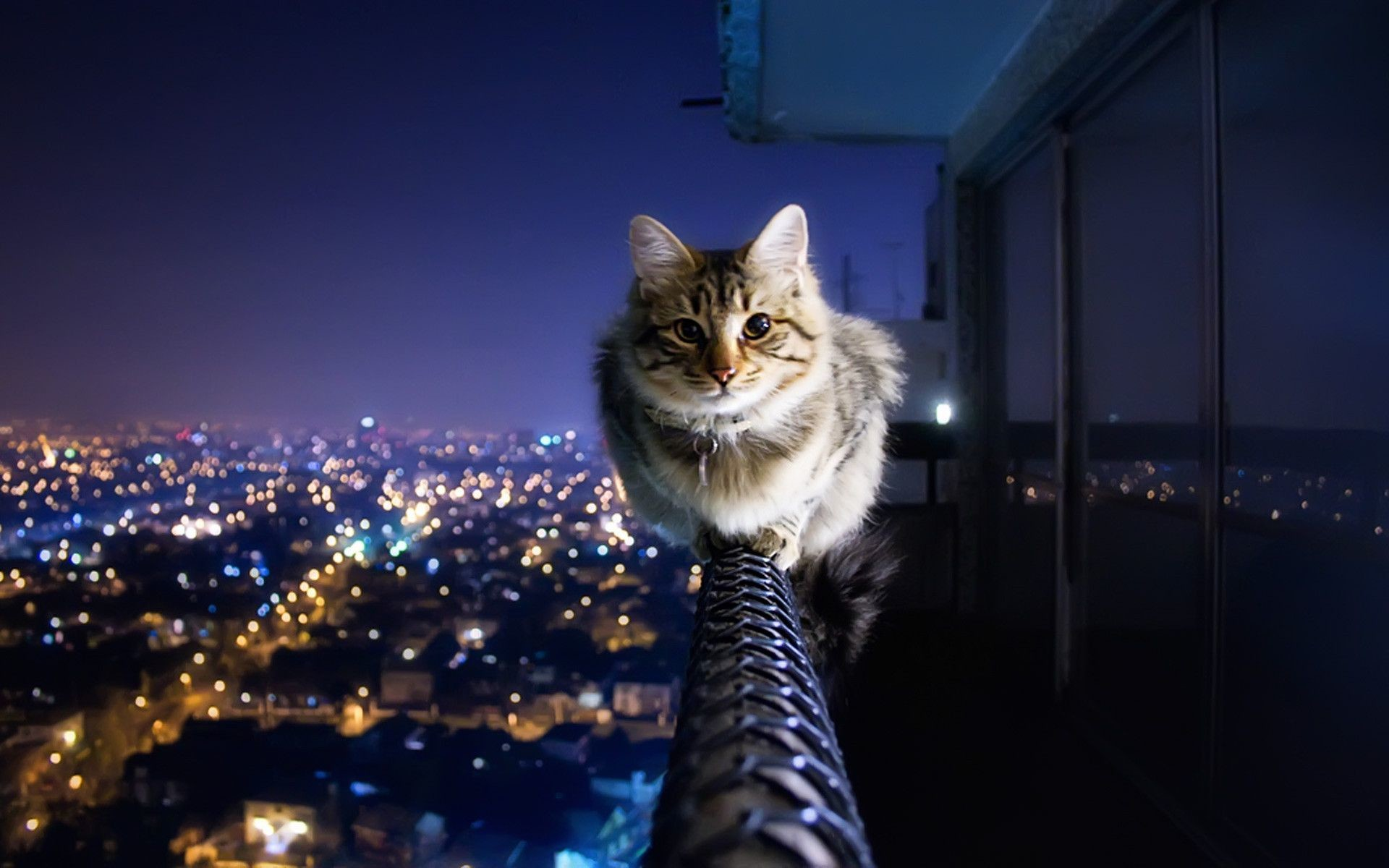 … 48 cats wallpapers …