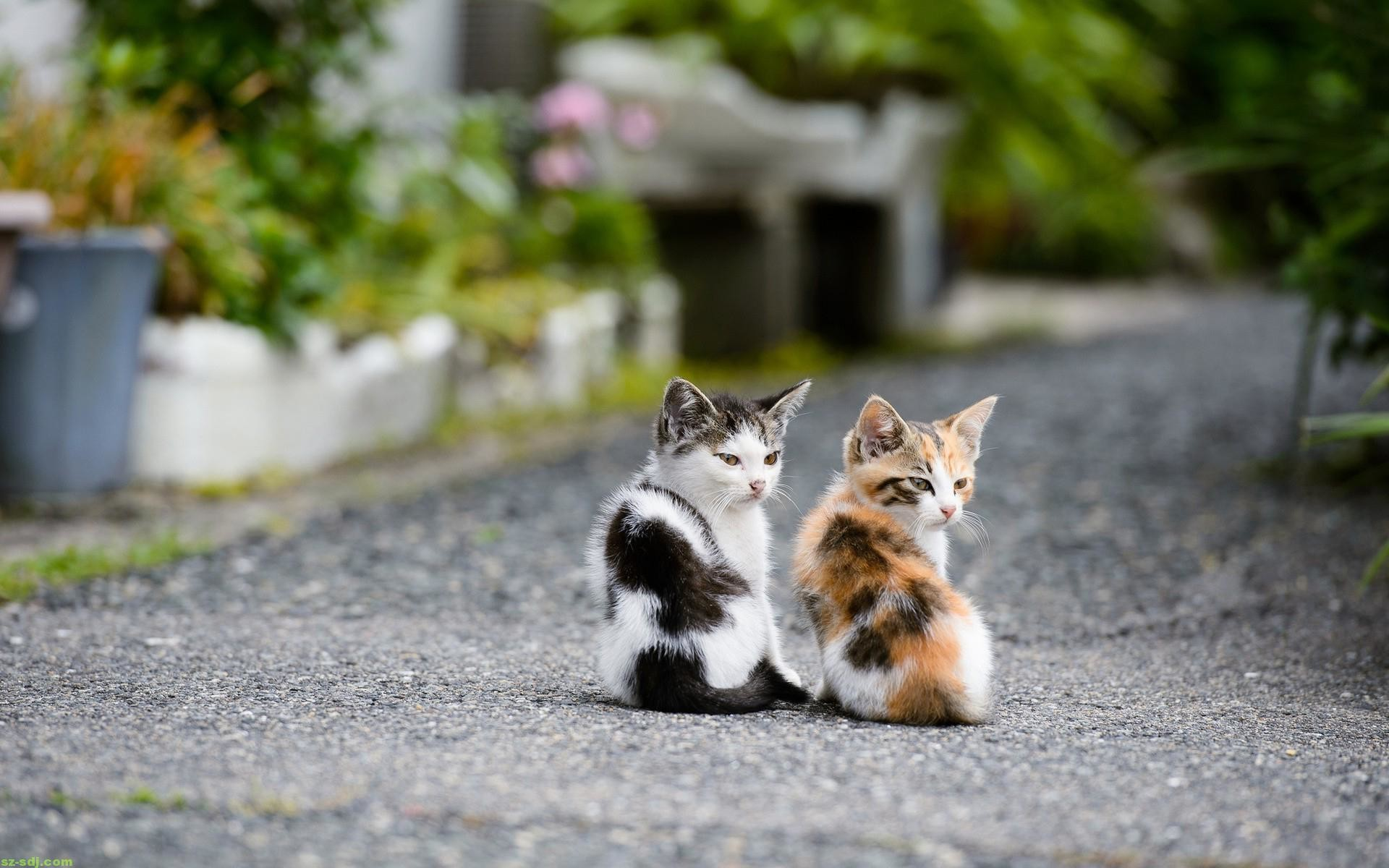 Adorable Cat Wallpapers Group (7)