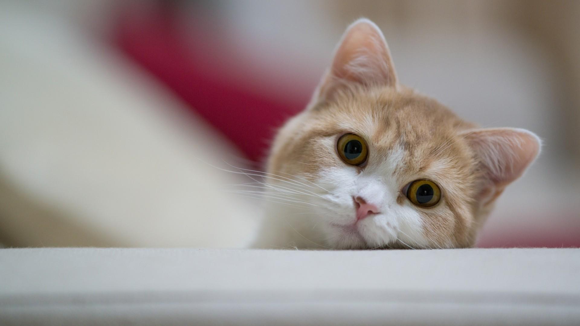 0 Cat Wallpaper HD Download Cat Wallpaper HD Download