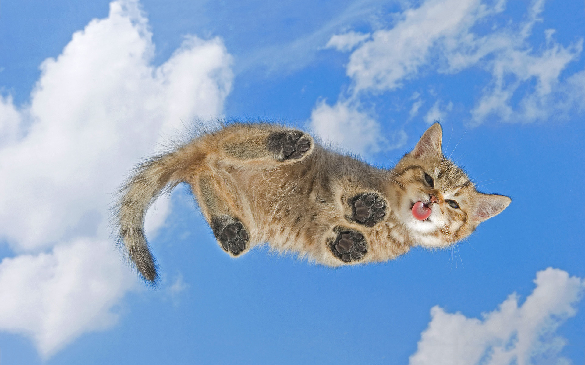 kitty cat wallpapers. Â«Â«