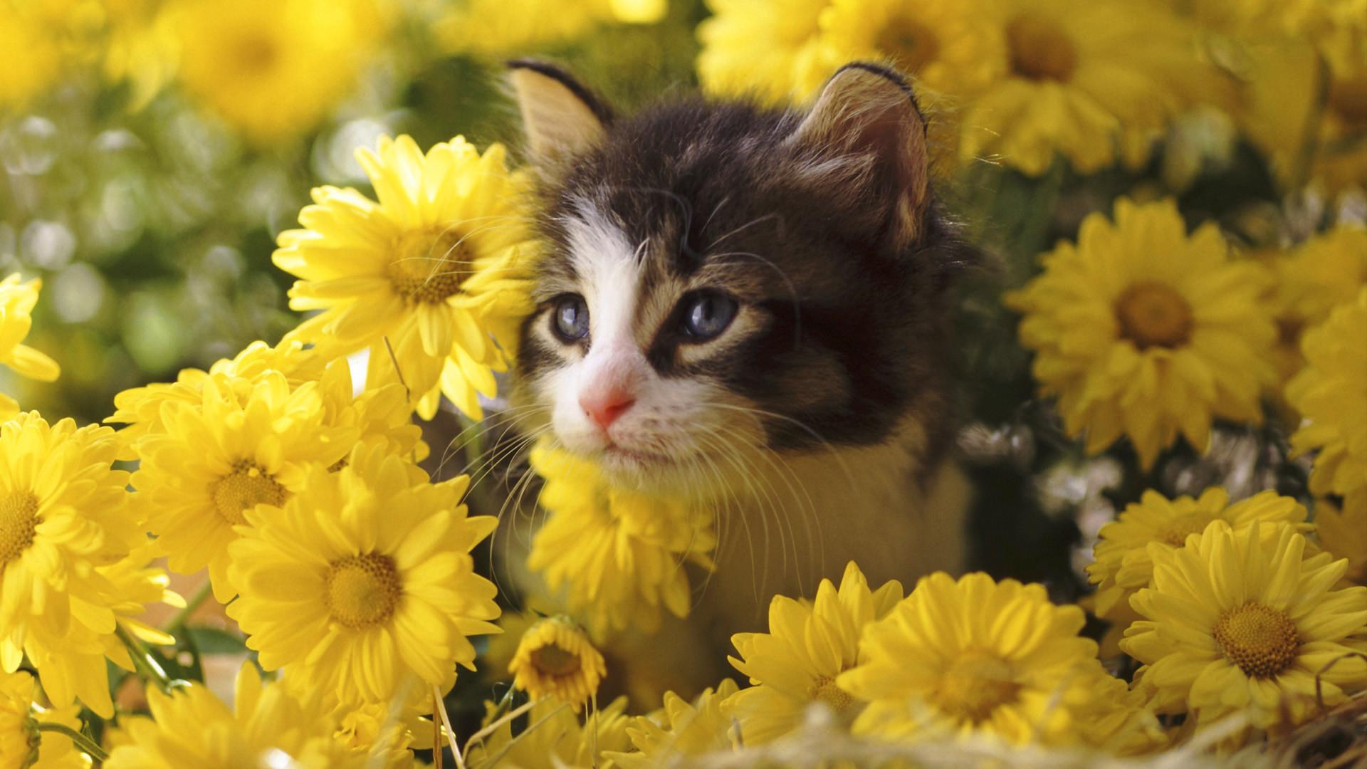 Kitten Among Mums