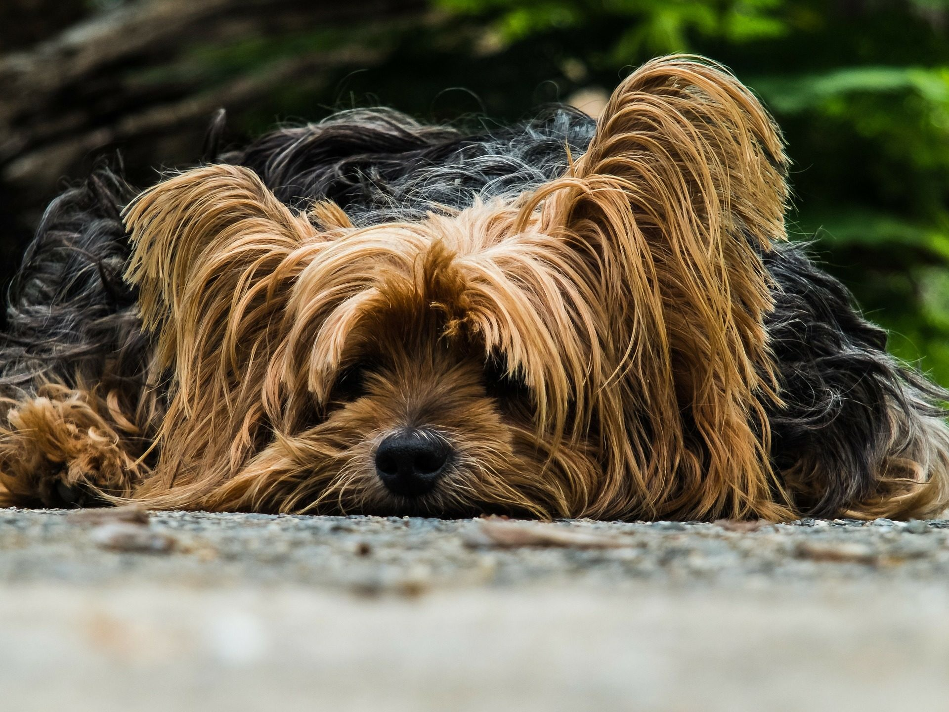 Explore Yorkie Dogs, Cute Dogs, and more!
