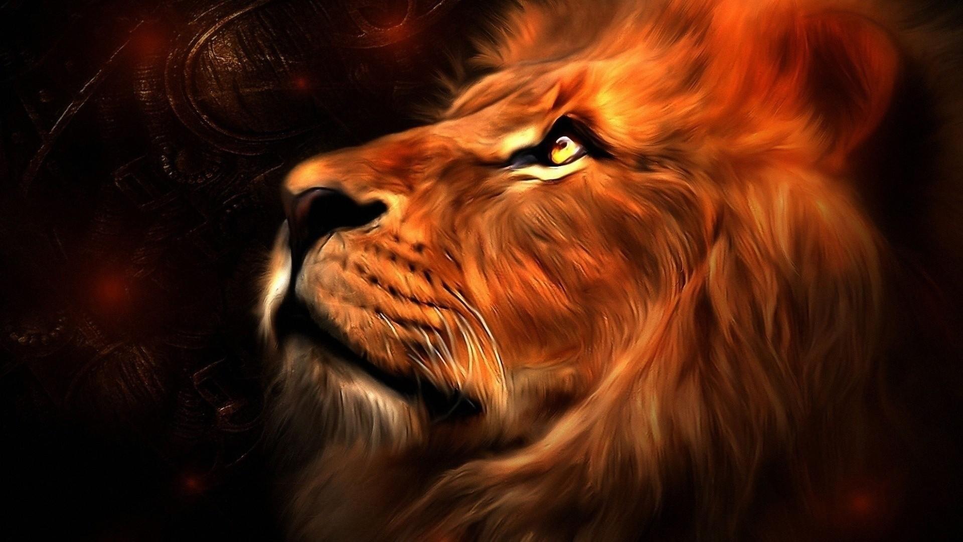 Lion wallpaper – 987474