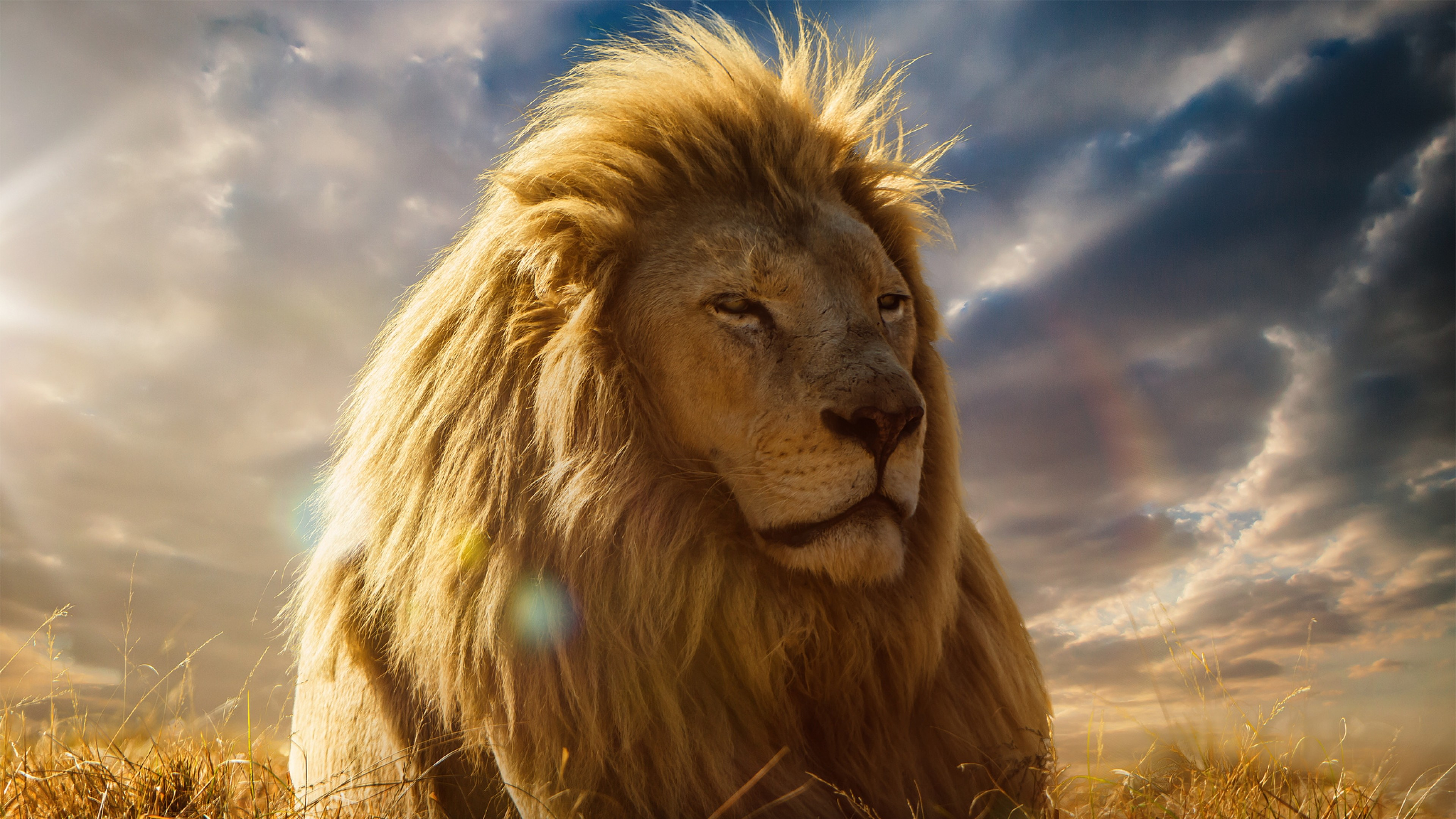 Preview wallpaper lion, king of beasts, mane, savannah 3840×2160