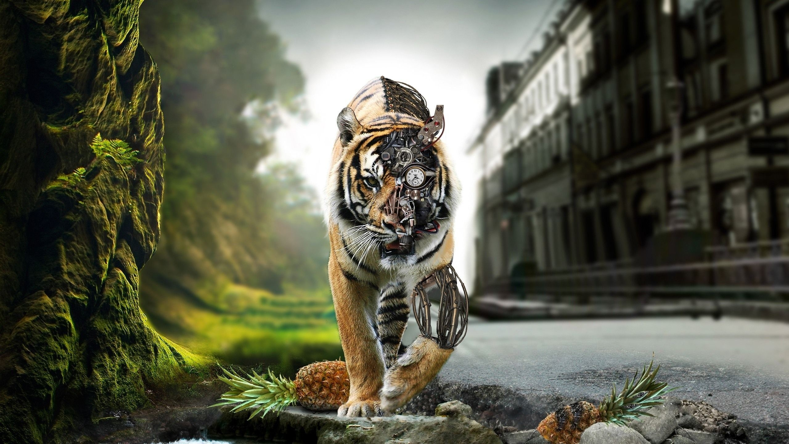 Cool Hd Wallpapers p Lion Wallpapers Kid HD Lion Wallpapers Wallpapers)