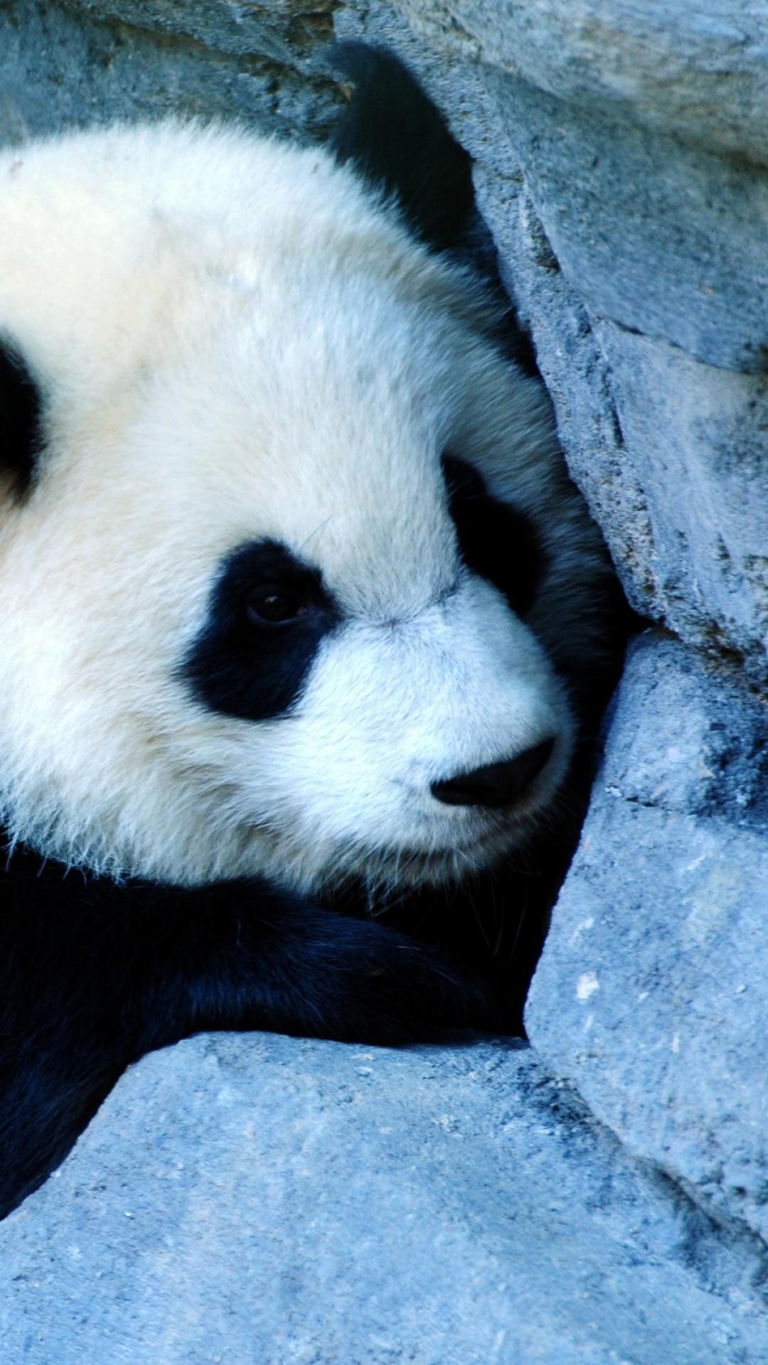 Wallpaper panda, wall, sadness, baby