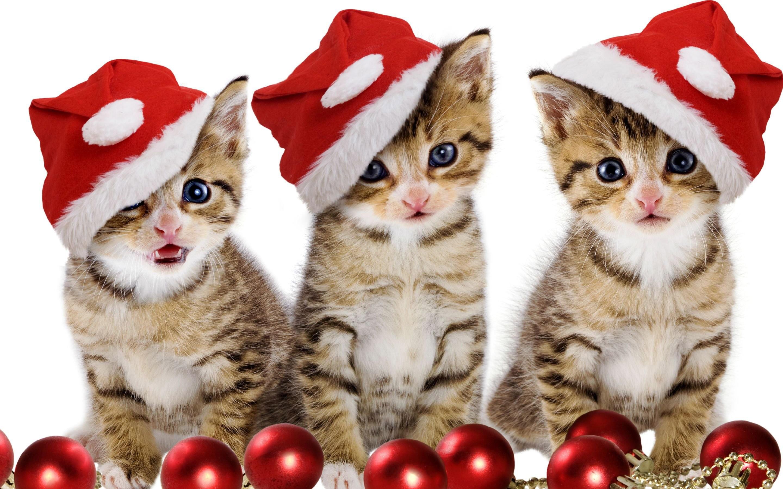 Christmas Kitten Wallpaper Cats Animals (46 Wallpapers) – HD Wallpapers