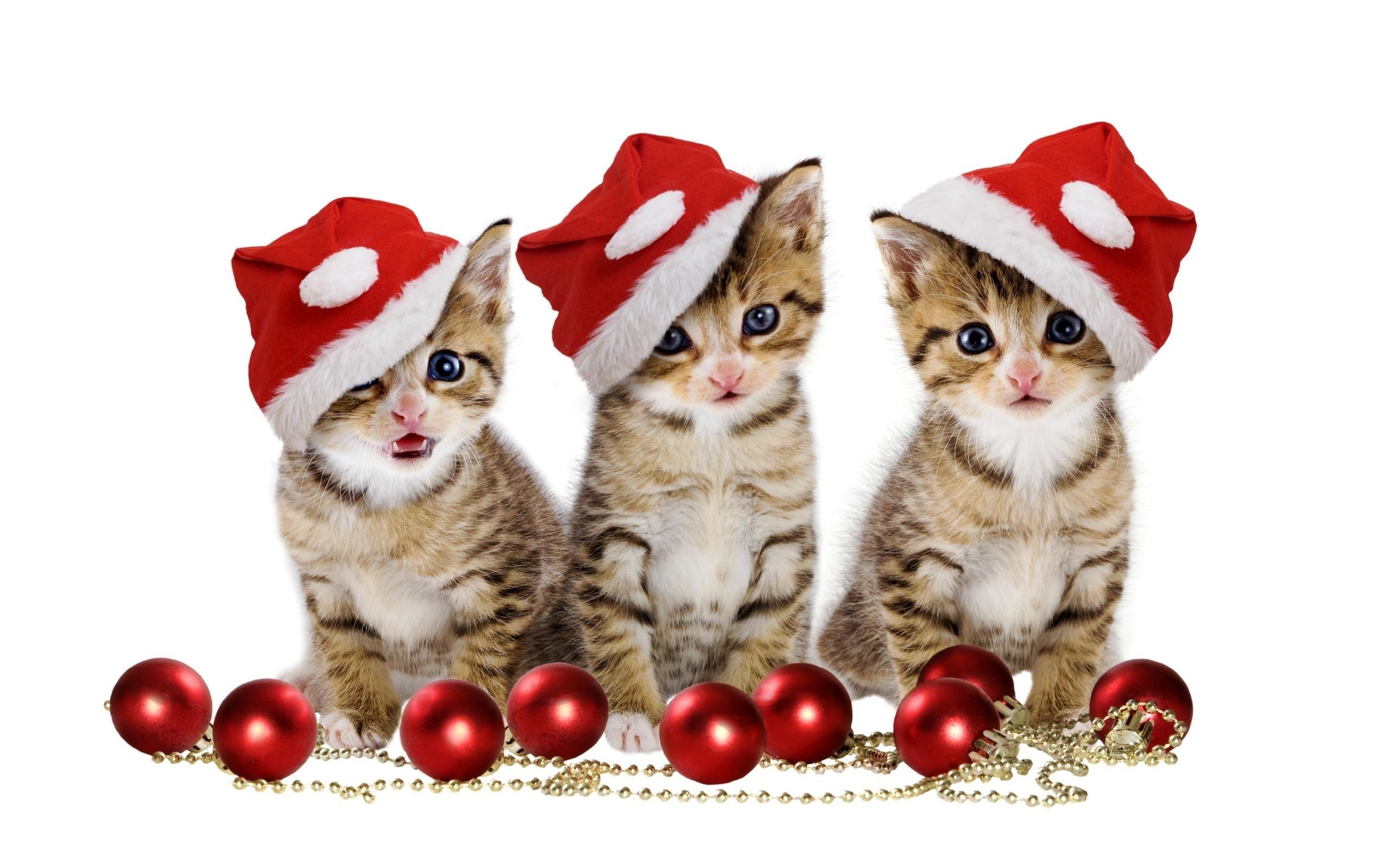 … Christmas kittens HD Wallpaper 2560×1600