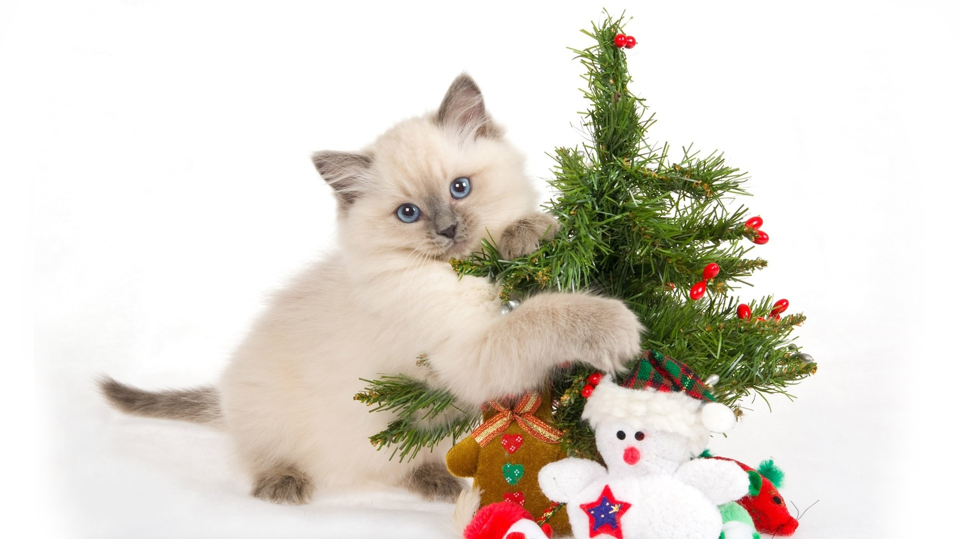 Wallpaper kitten, spotted, toys, tree, new year, christmas