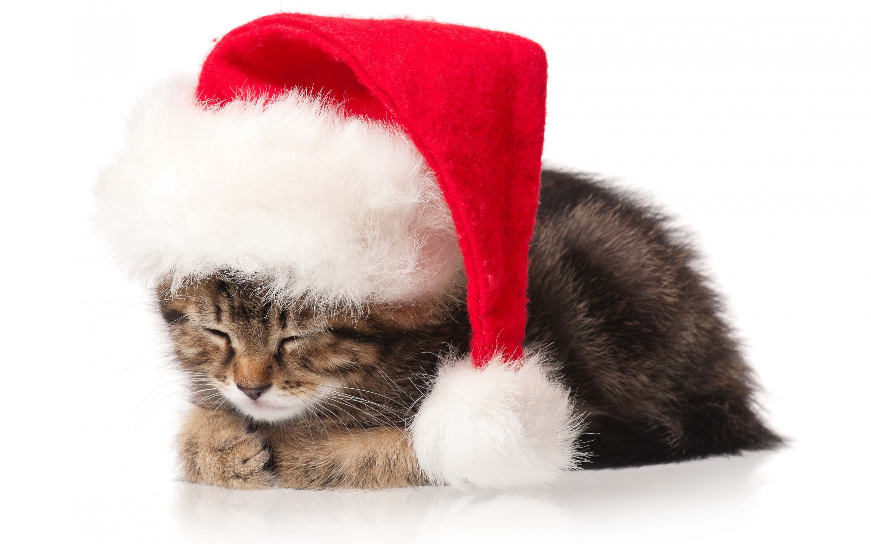 Cat Kitten Christmas Holidays New Year wallpaper by LadyGaga .