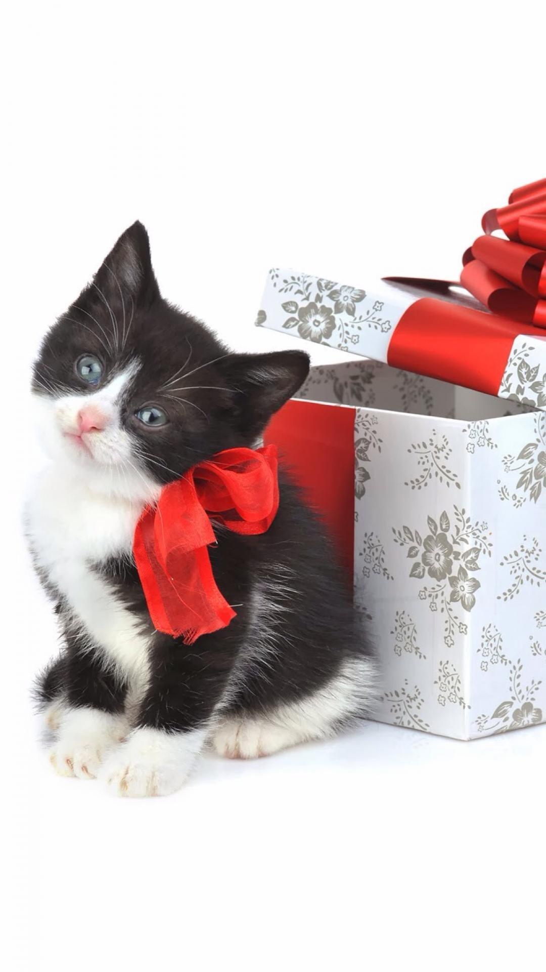 Christmas Kitten Present iPhone 6 wallpaper