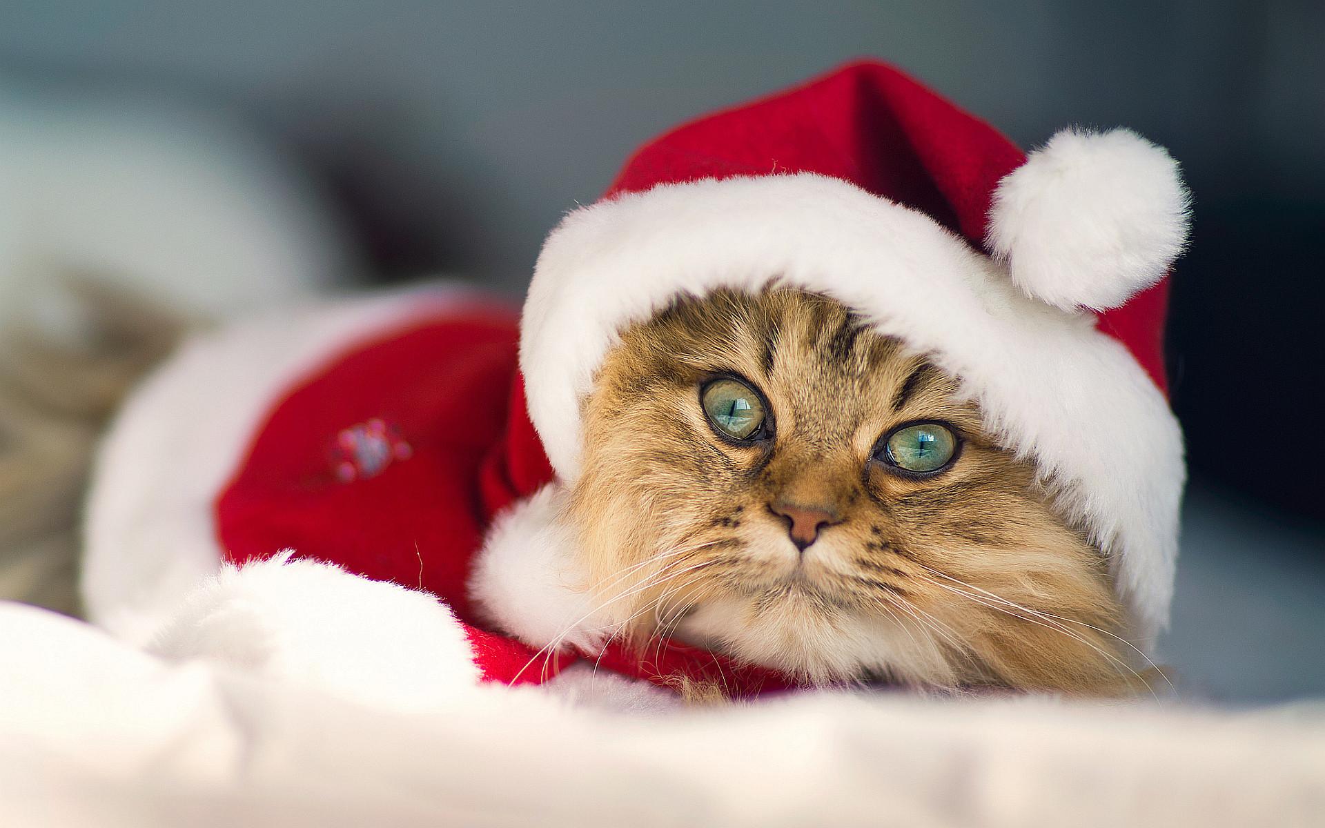 Christmas Kittens Wallpaper Desktop