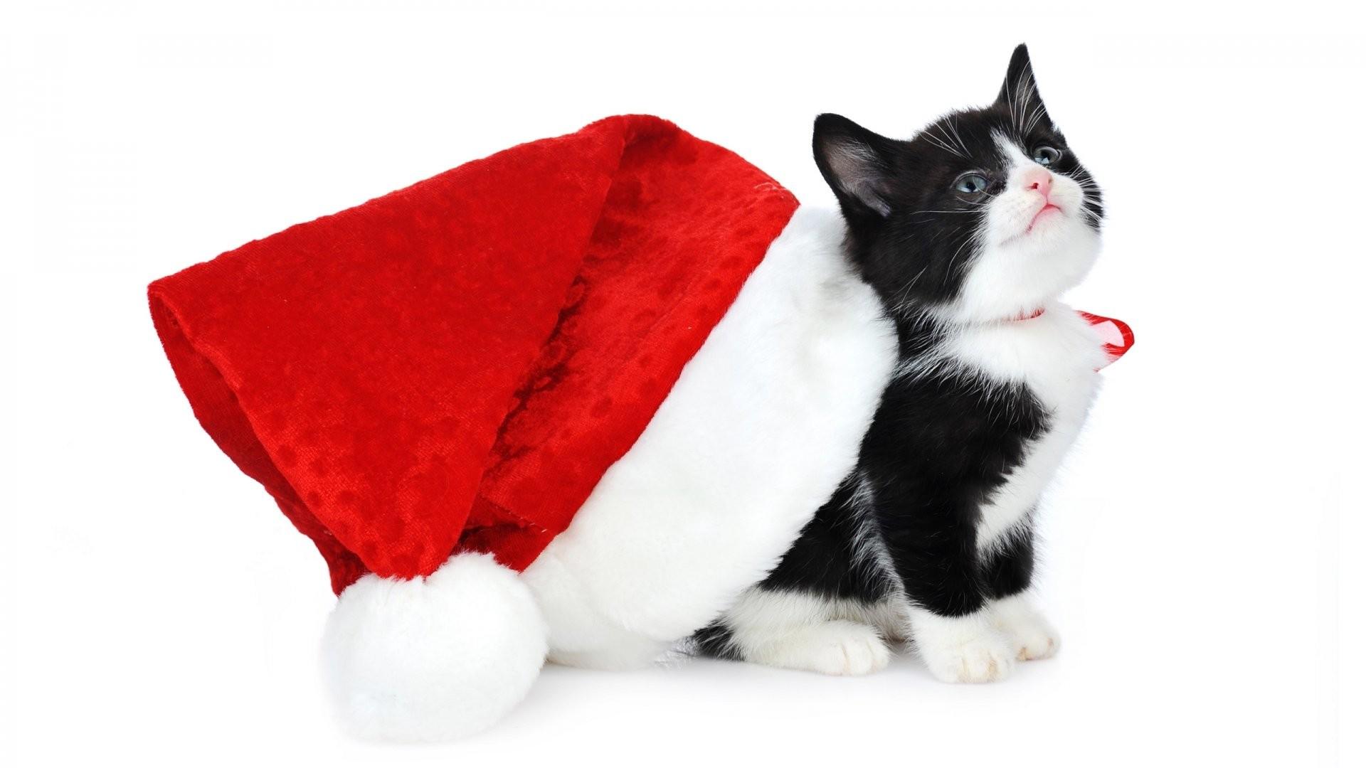 Christmas Kitten 647543