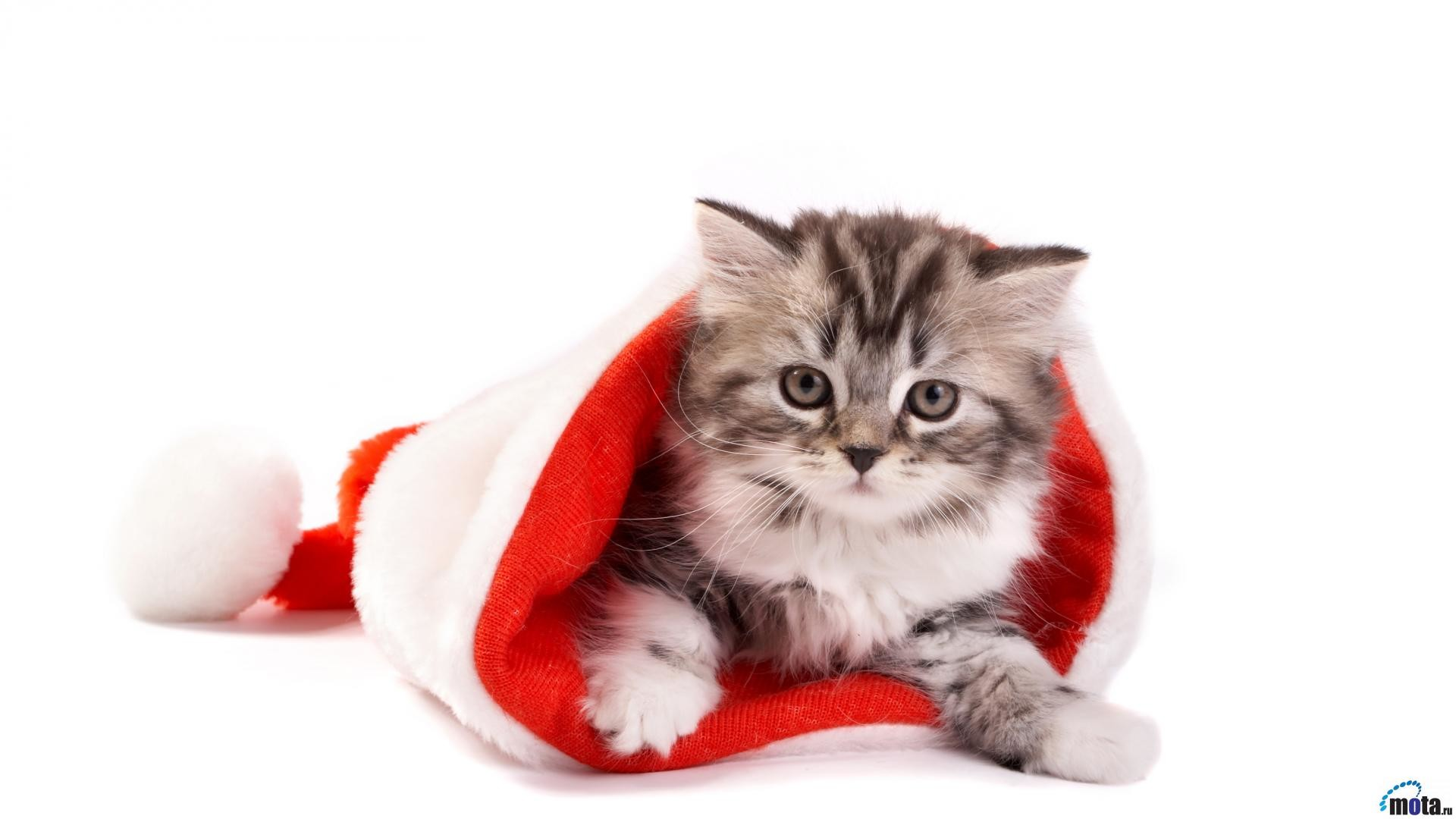Images For > Christmas Cat Wallpaper Desktop