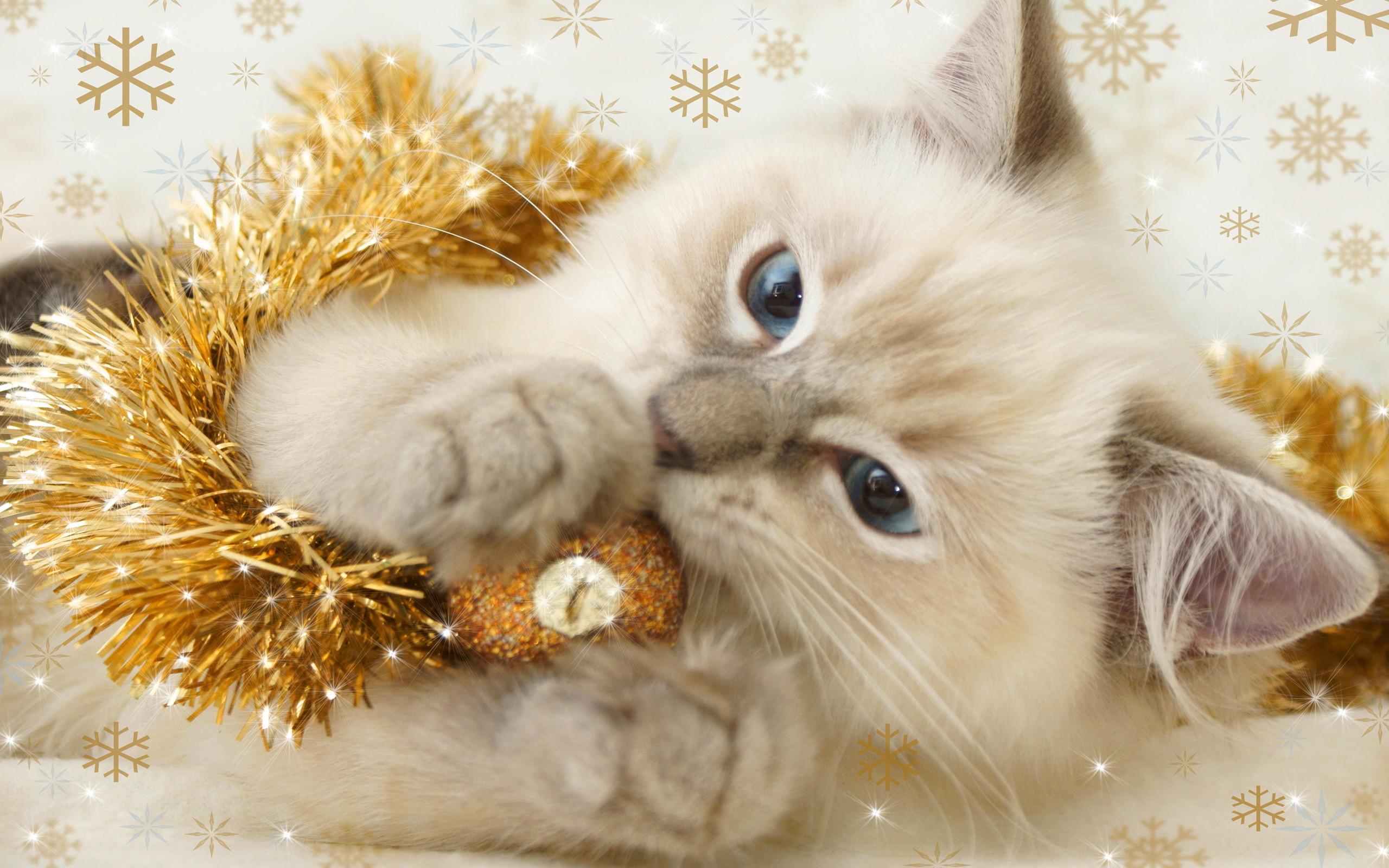 Christmas Kitten. – Cats Wallpaper (36711894) – Fanpop