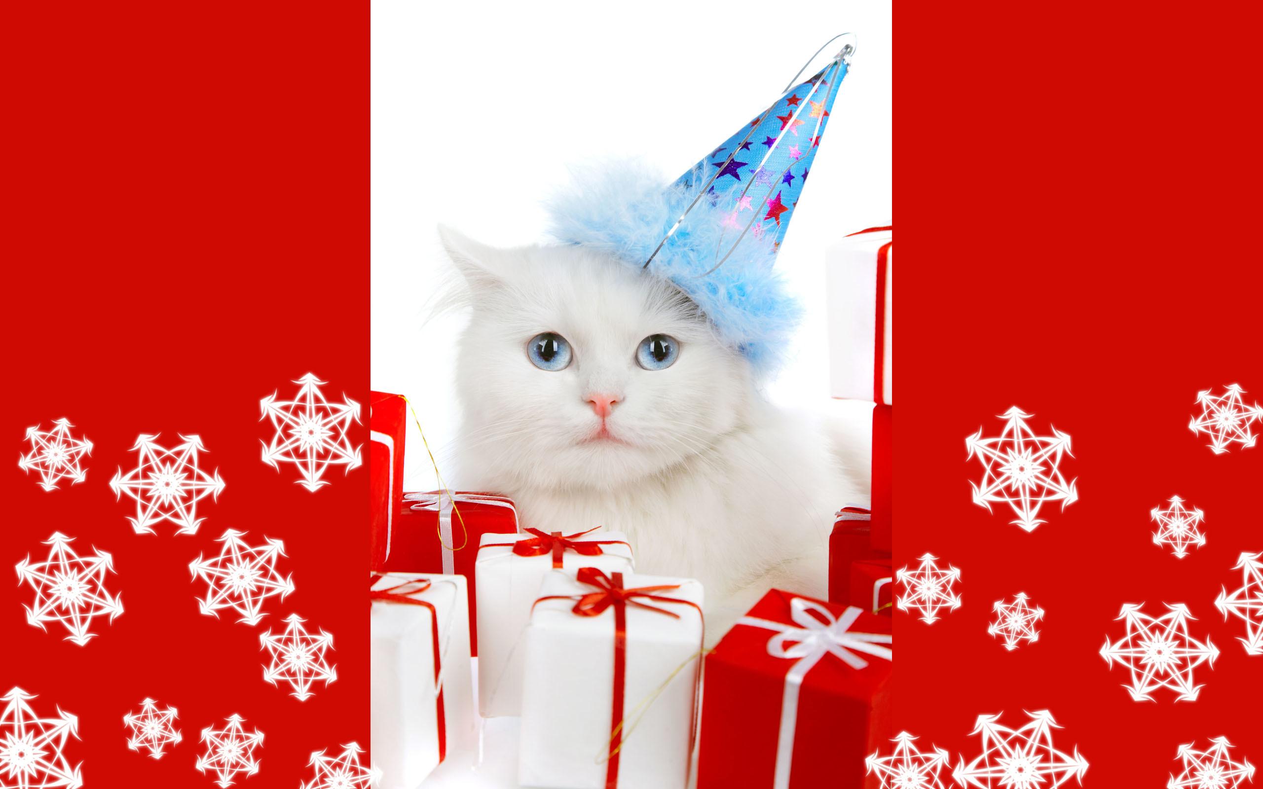 Christmas Kitten Wallpaper Free
