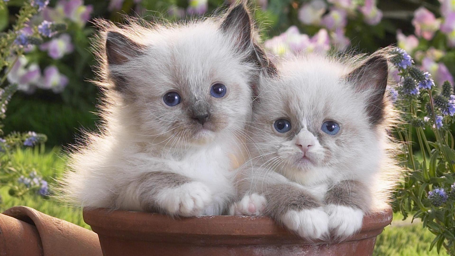 10. cute-kitten-wallpaper10-600×338
