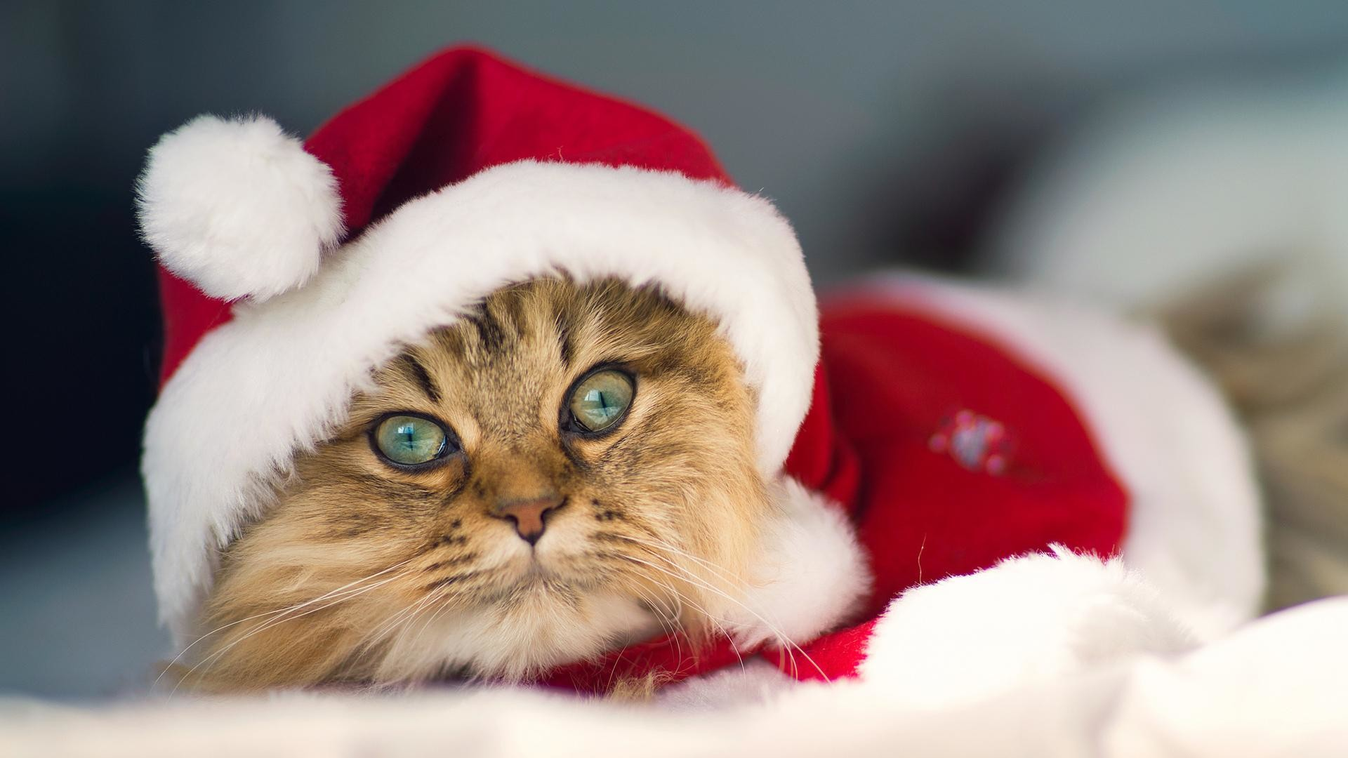 Christmas Kitty Wallpaper