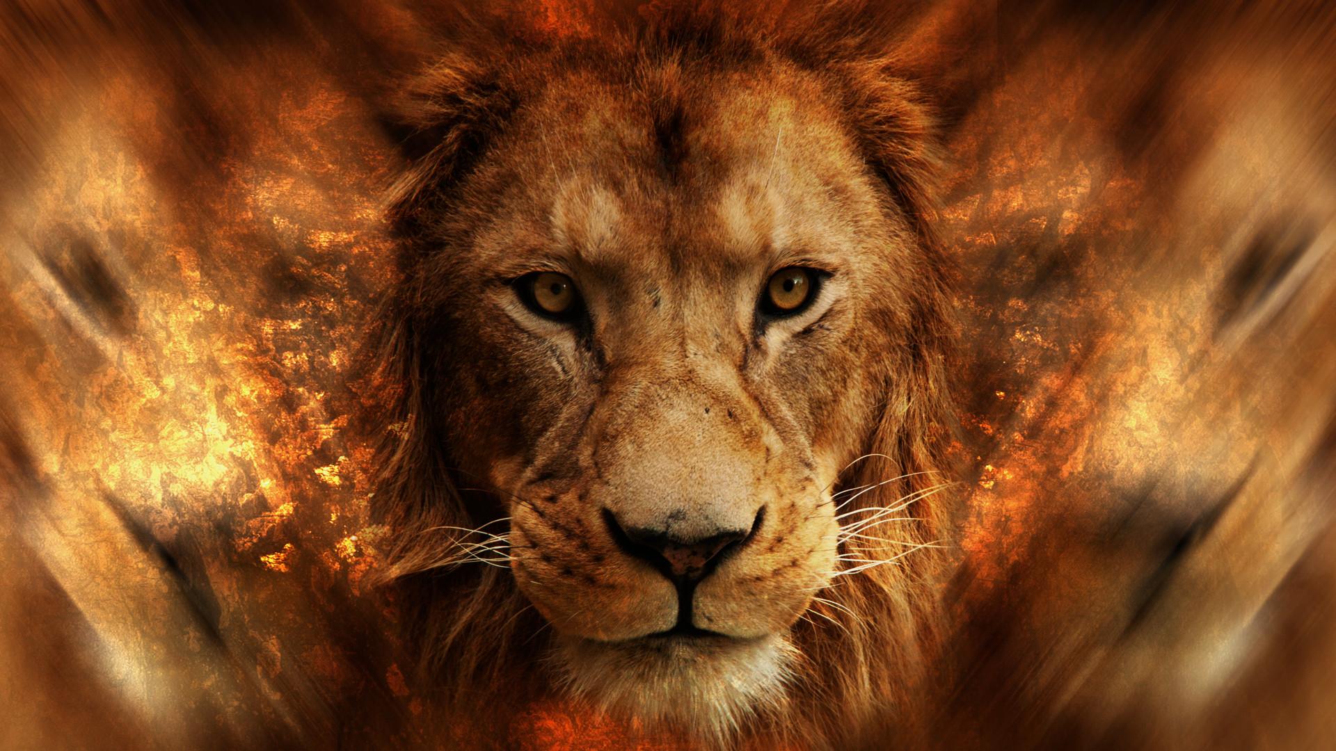 lion, Animals, Africa. animals, Lamb Wallpaper HD