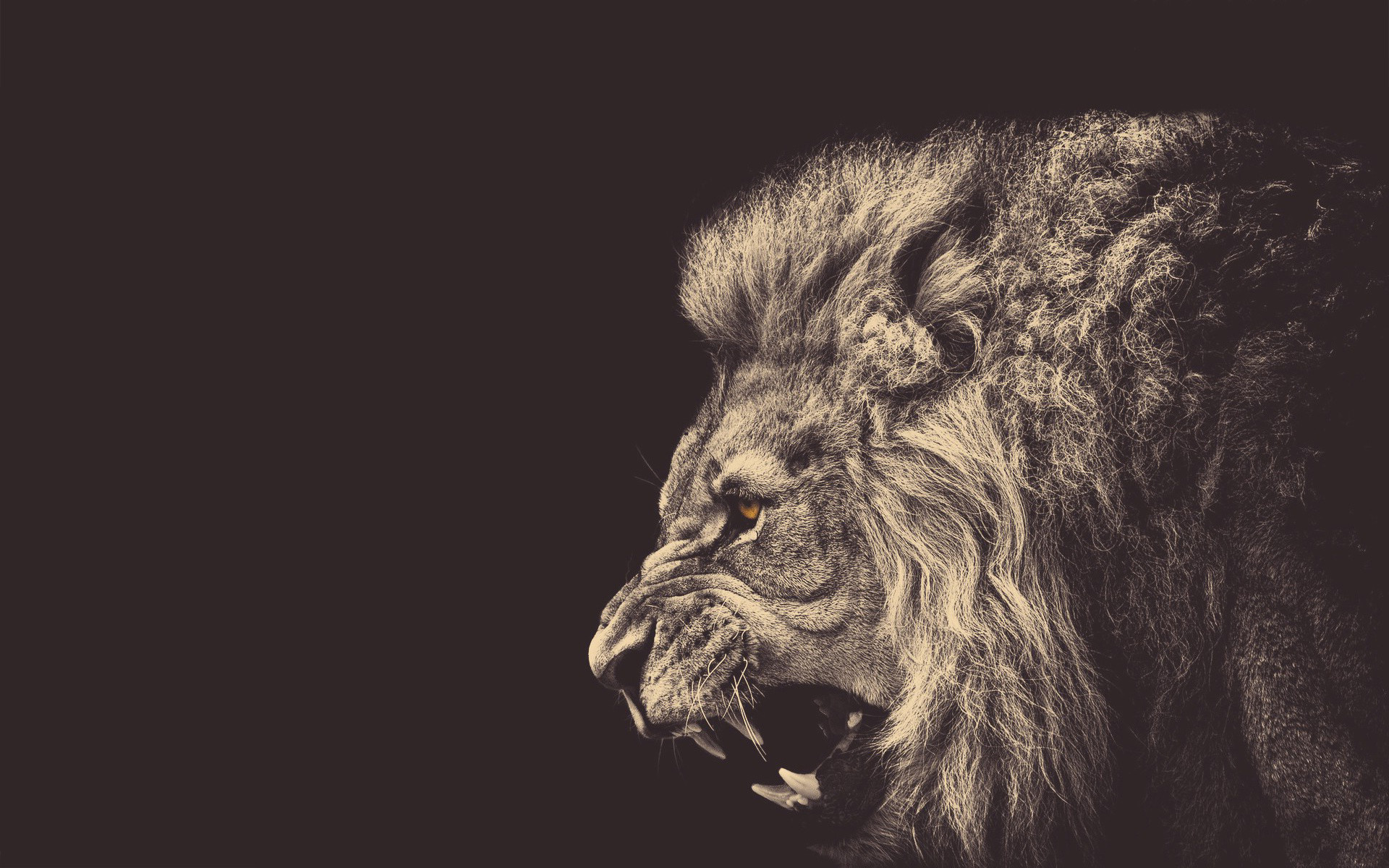 """Search Results for """"classy lion wallpaper"""" – Adorable Wallpapers"""