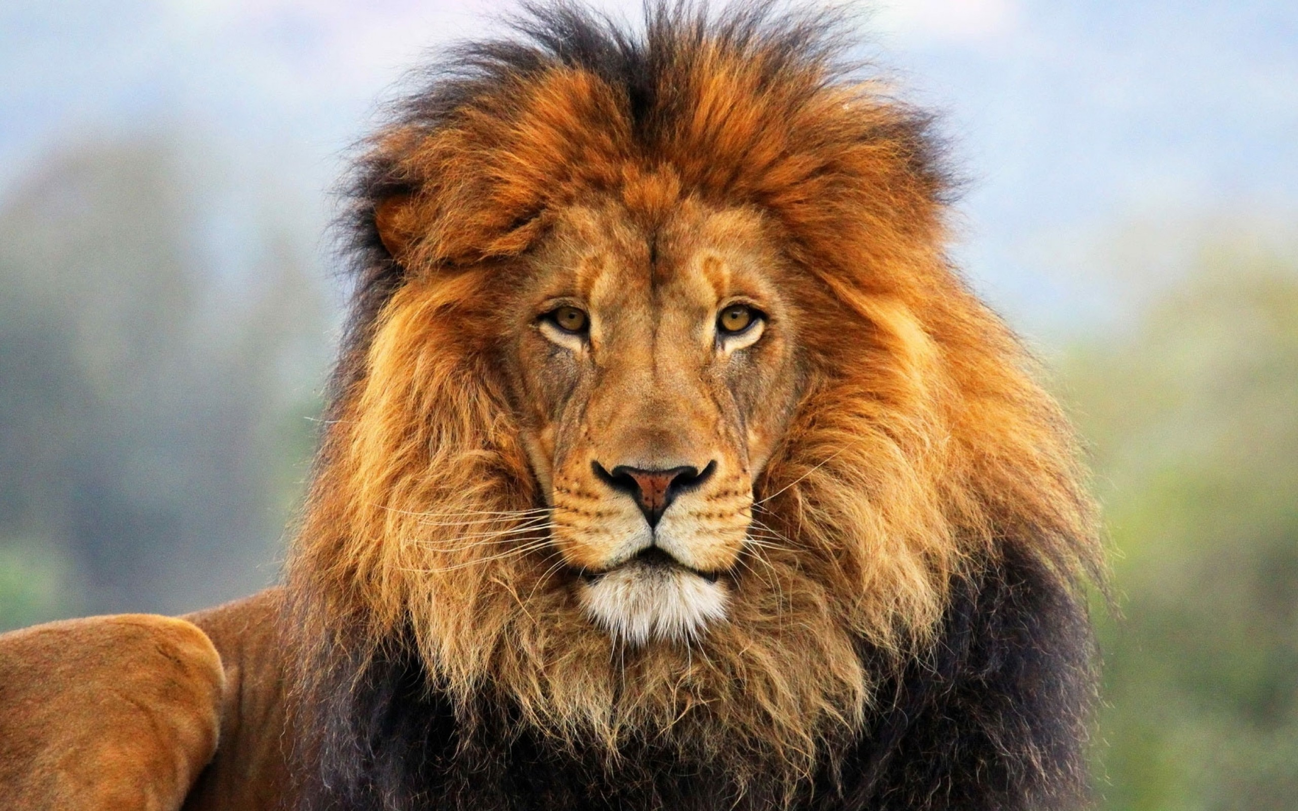 Lion and Tiger – Hybrid Animals   Animal   Pinterest   Lions, Lions photos  and Animal