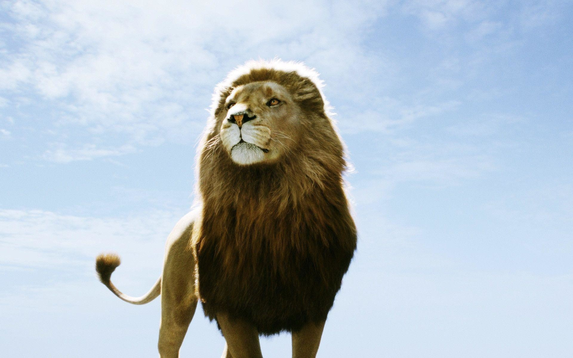 Image – Aslan-Lion-The-Chronicles-of-Narnia-Wallpaper.