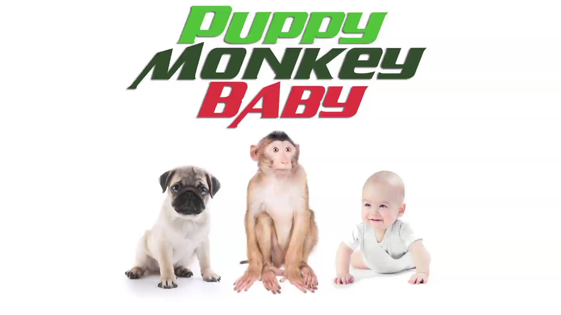 """""""PUPPY MONKEY BABY"""" – MOUNTAIN DEW TV COMMERCIAL TRIBUTE – YouTube"""