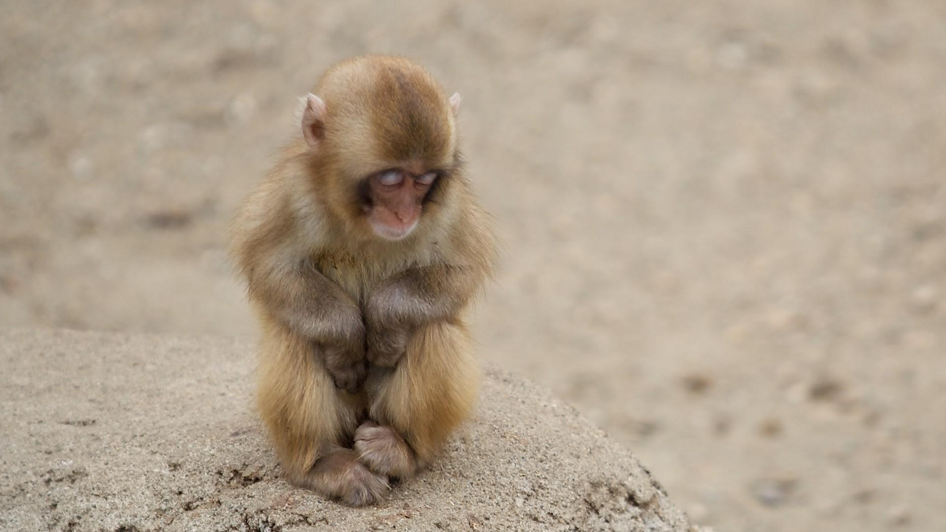 Wallpaper monkey, baby, holiday, sand