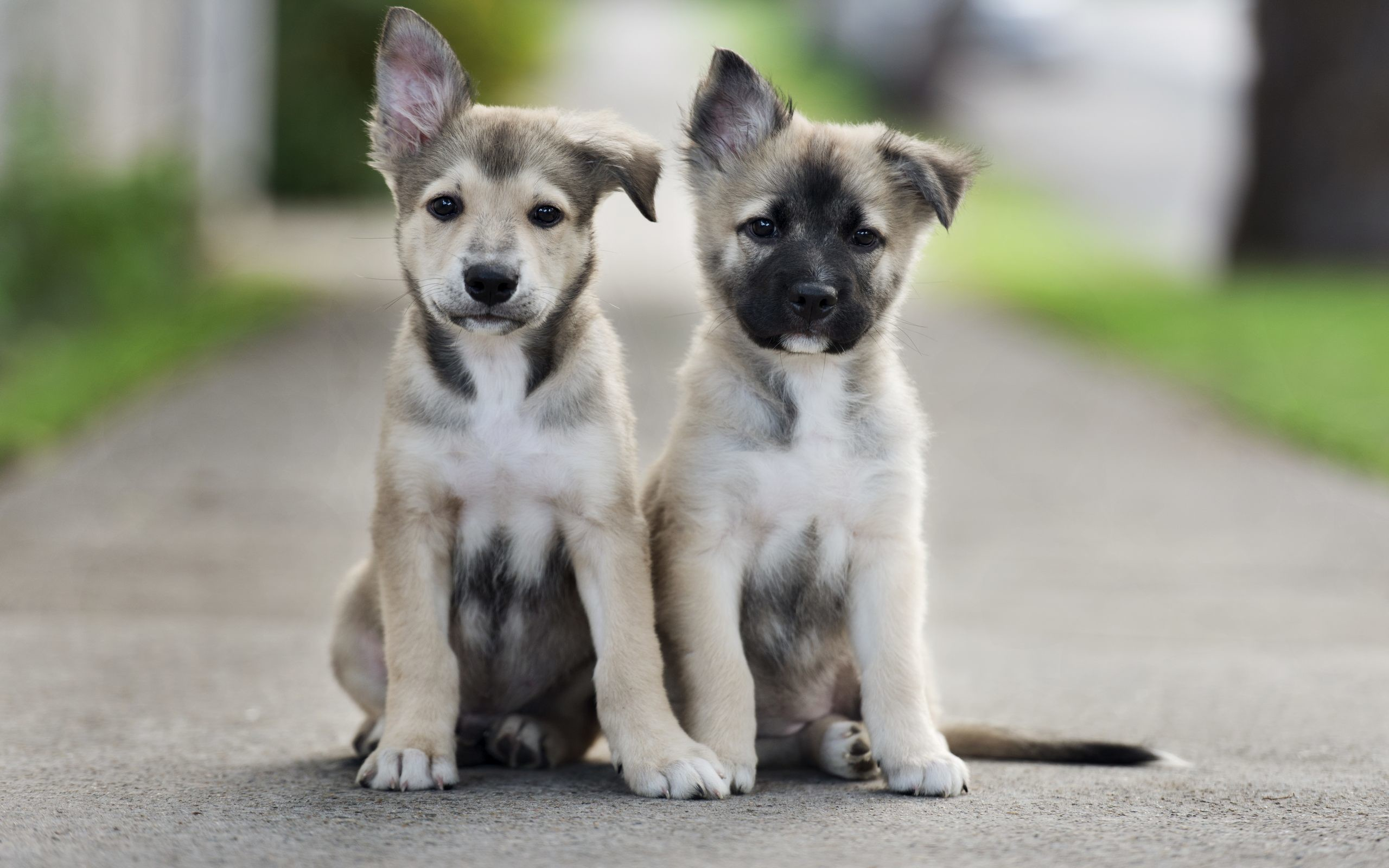 Cute Puppies Wallpapers Phone For Sale Puppy Tumblr Dog Baby .