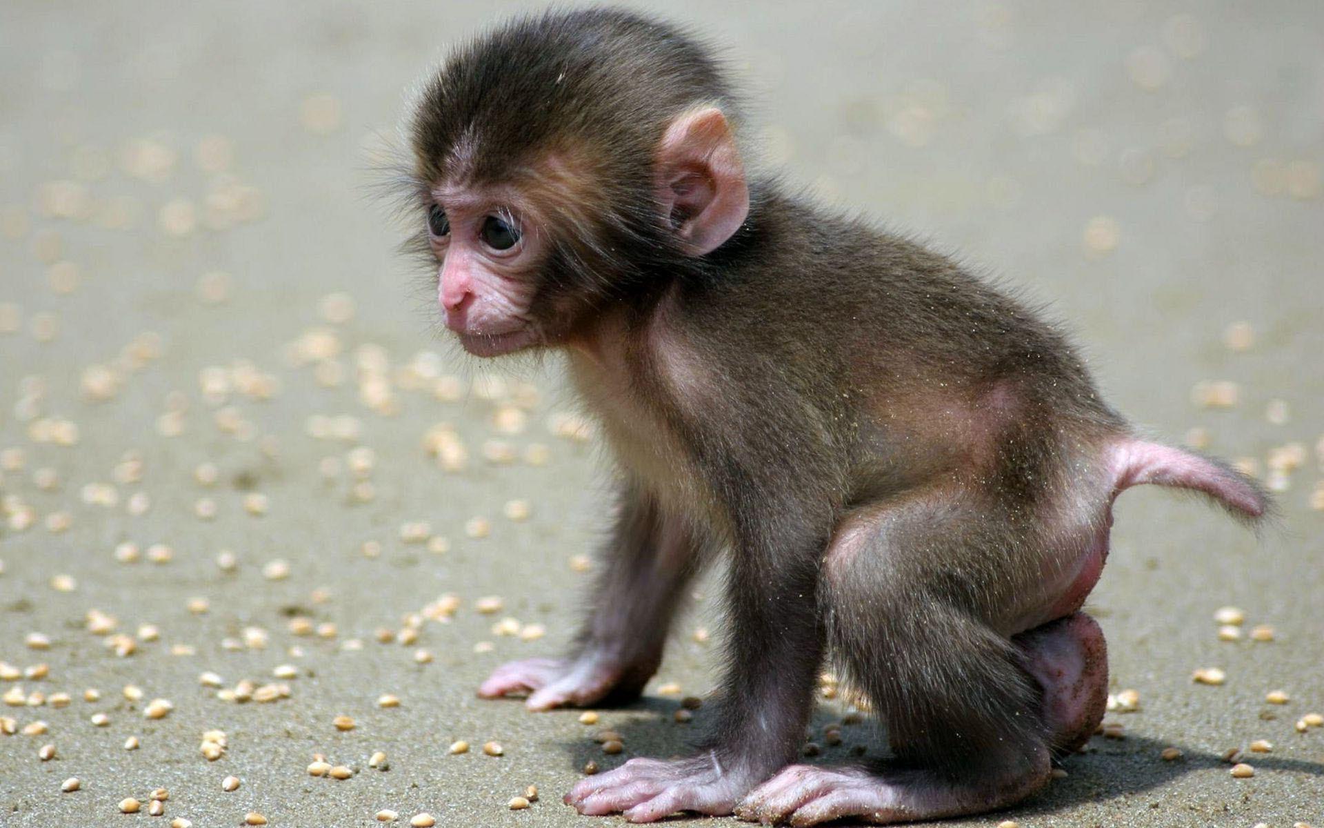 Baby Monkey Wallpapers Baby Monkeys