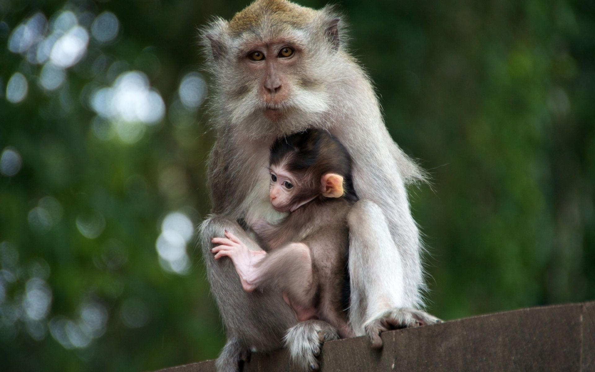 Cute monkeys wallpaper – 1213569