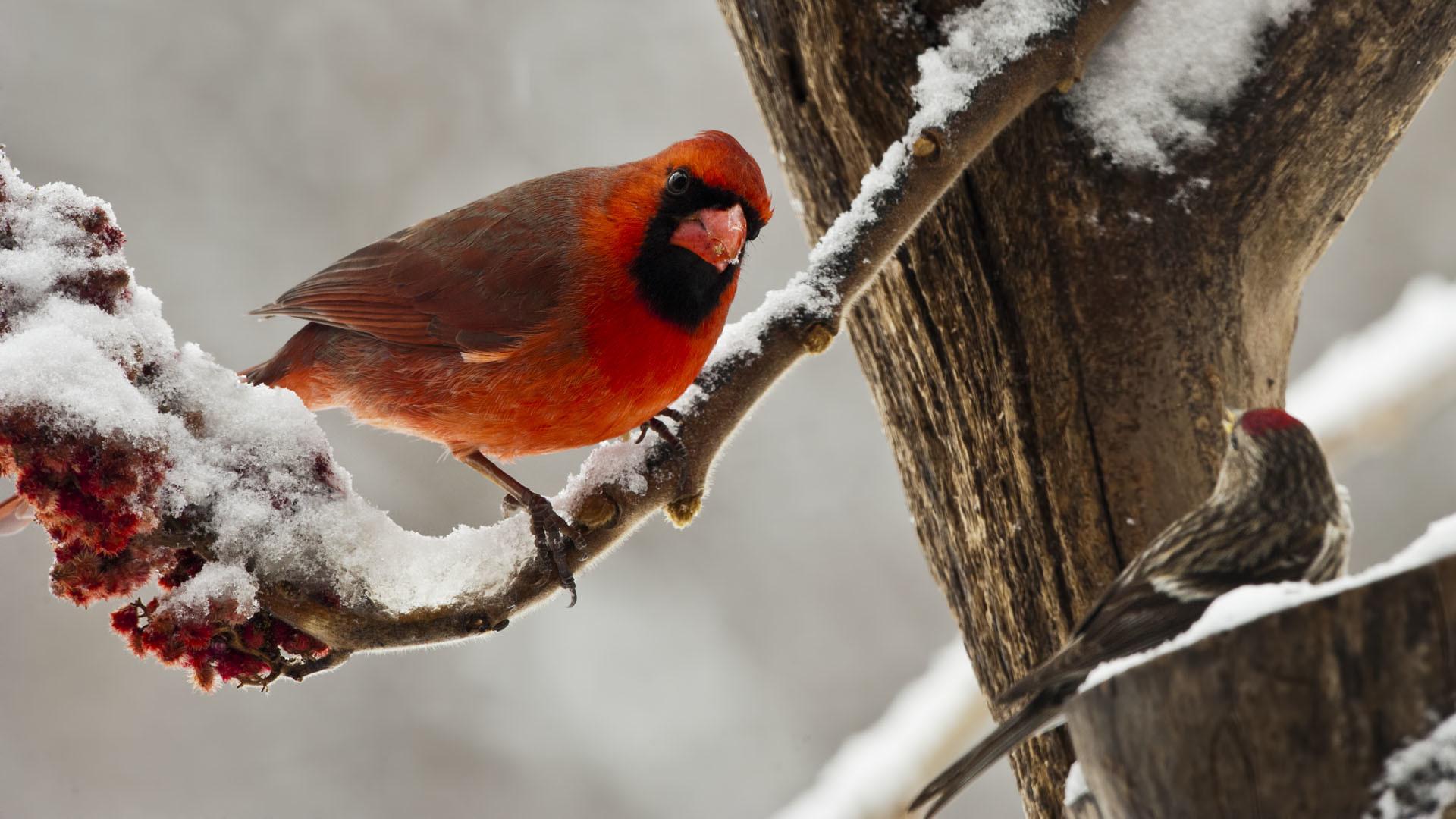 Birds Snow Winter wallpaper | | 219220 | WallpaperUP