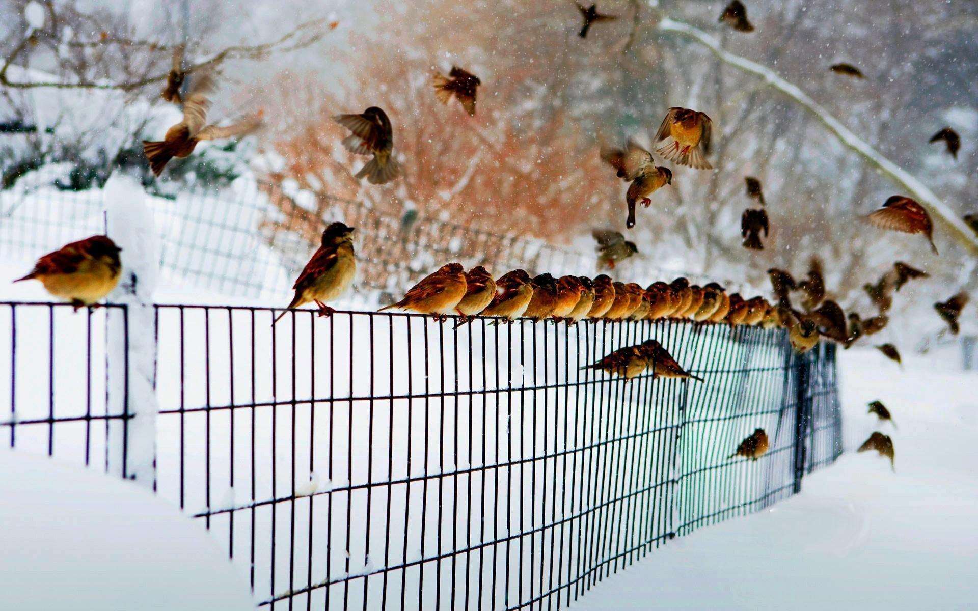 Cardinal winter · Birds ~ Chill Out