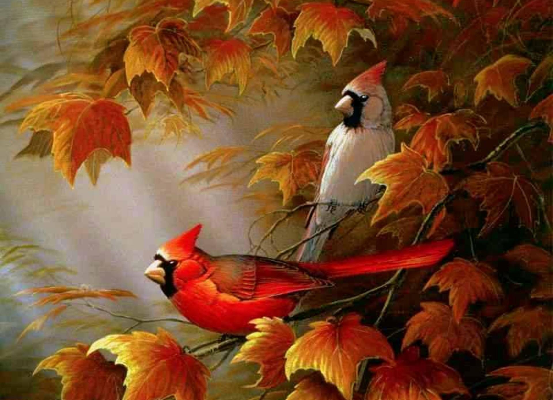 Cardinals birds – Autumn Cardinals Wallpapers – HD Wallpapers 95116