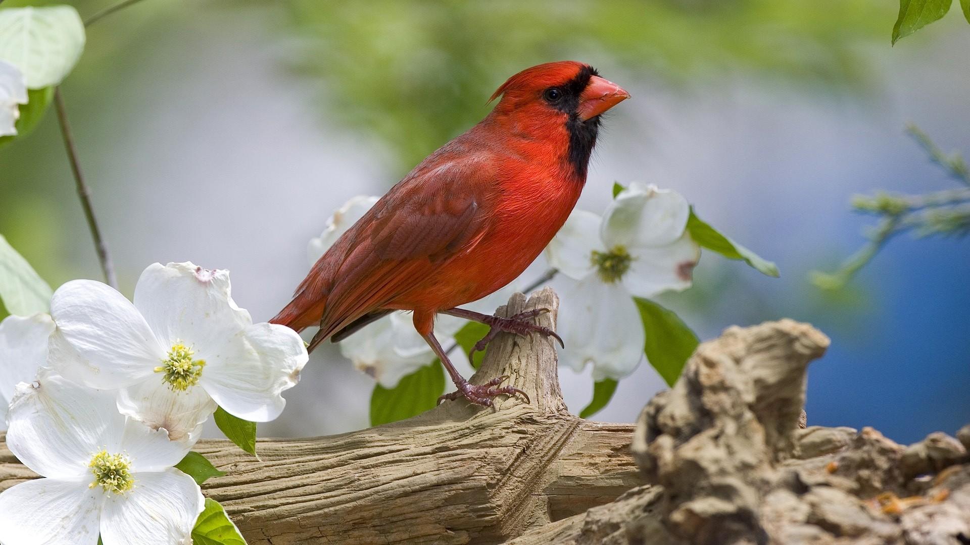 Preview cardinal