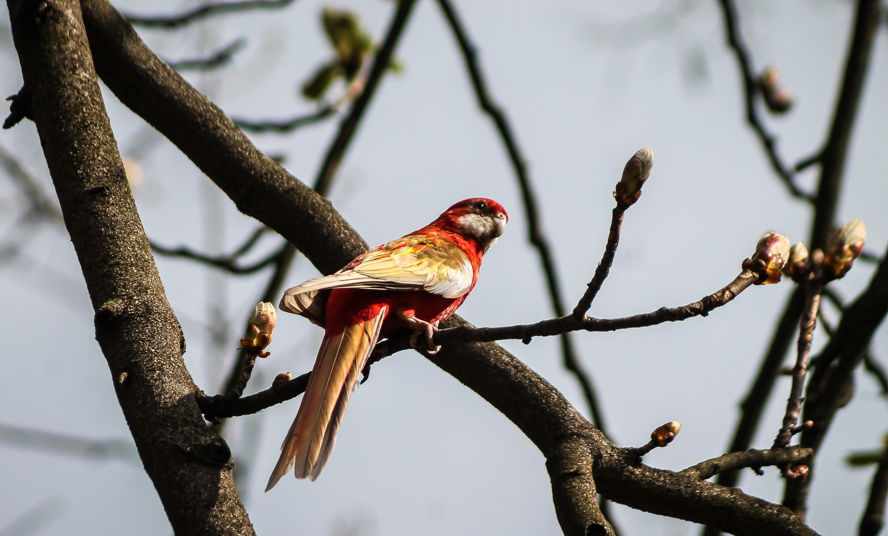 <b>cardinal bird</b> | … <b>