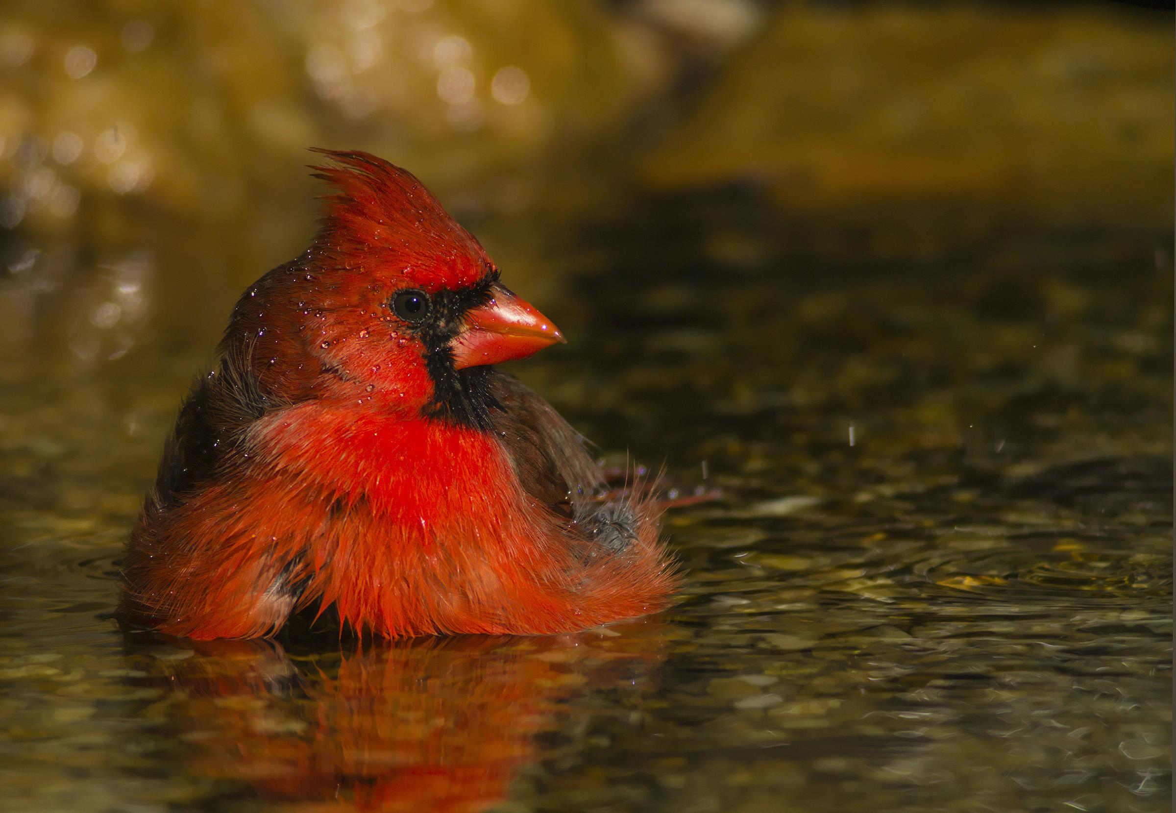Photo: Tara Tanaka/Audubon Photography Awards
