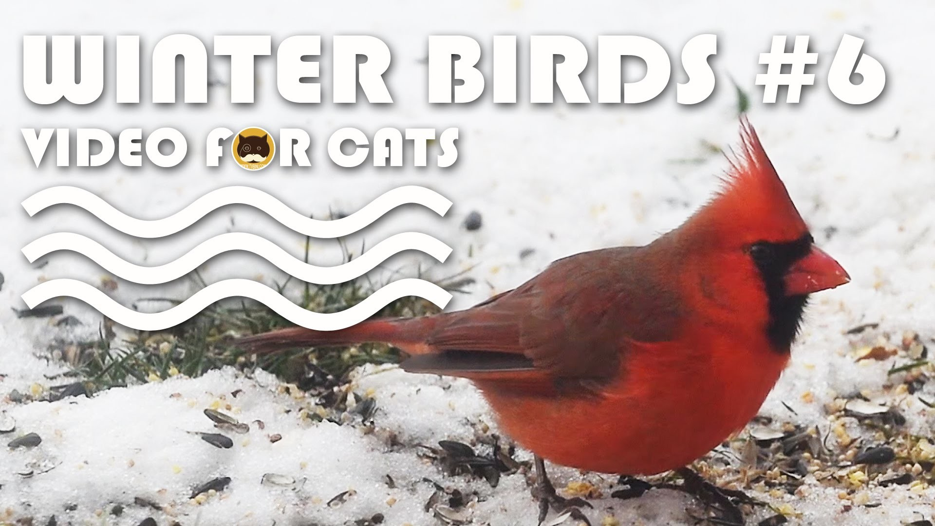 Winter Birds #6: N.Cardinal, Sparrows, M.Doves, Dark-eyed Junco, Finches. –  YouTube