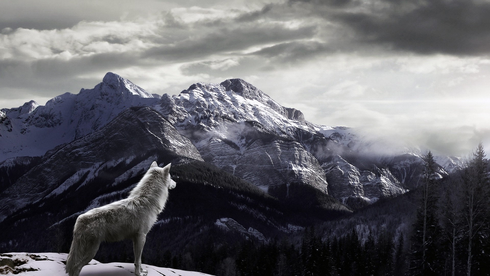 Howling Wolf Wallpapers Wallpaper