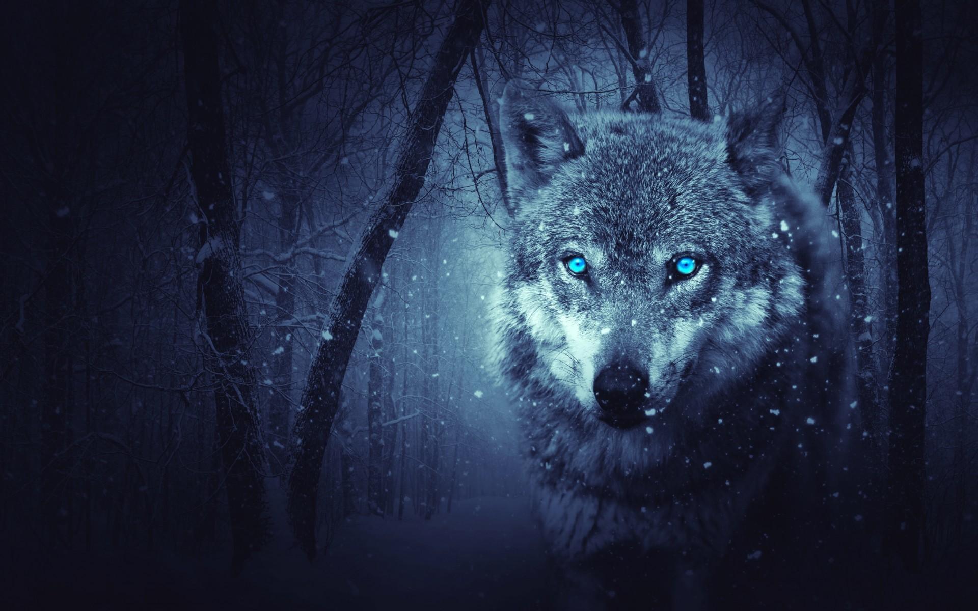 Animals / Wild Wolf Wallpaper