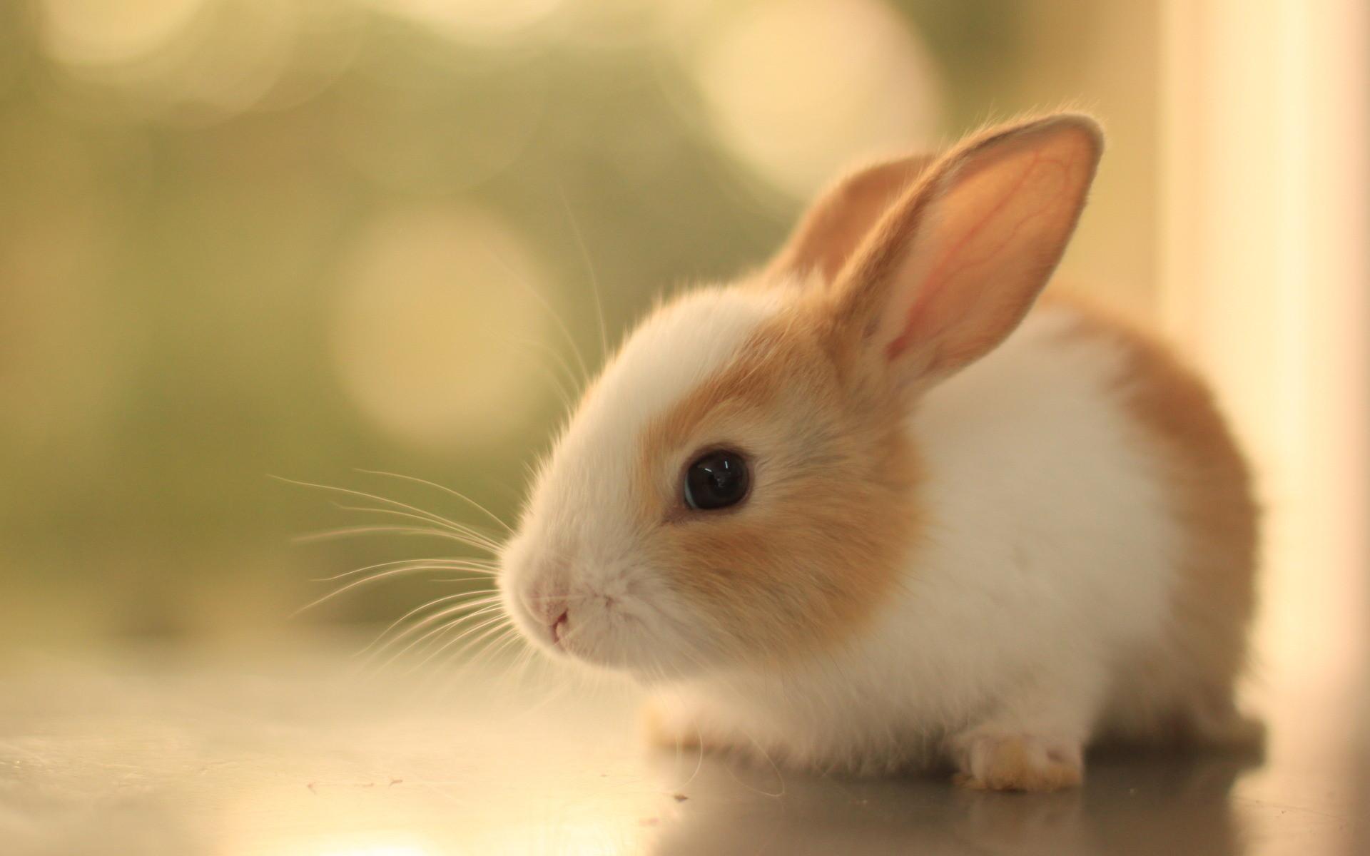 Abdorble Animals Desktop Wallpapers Pictures