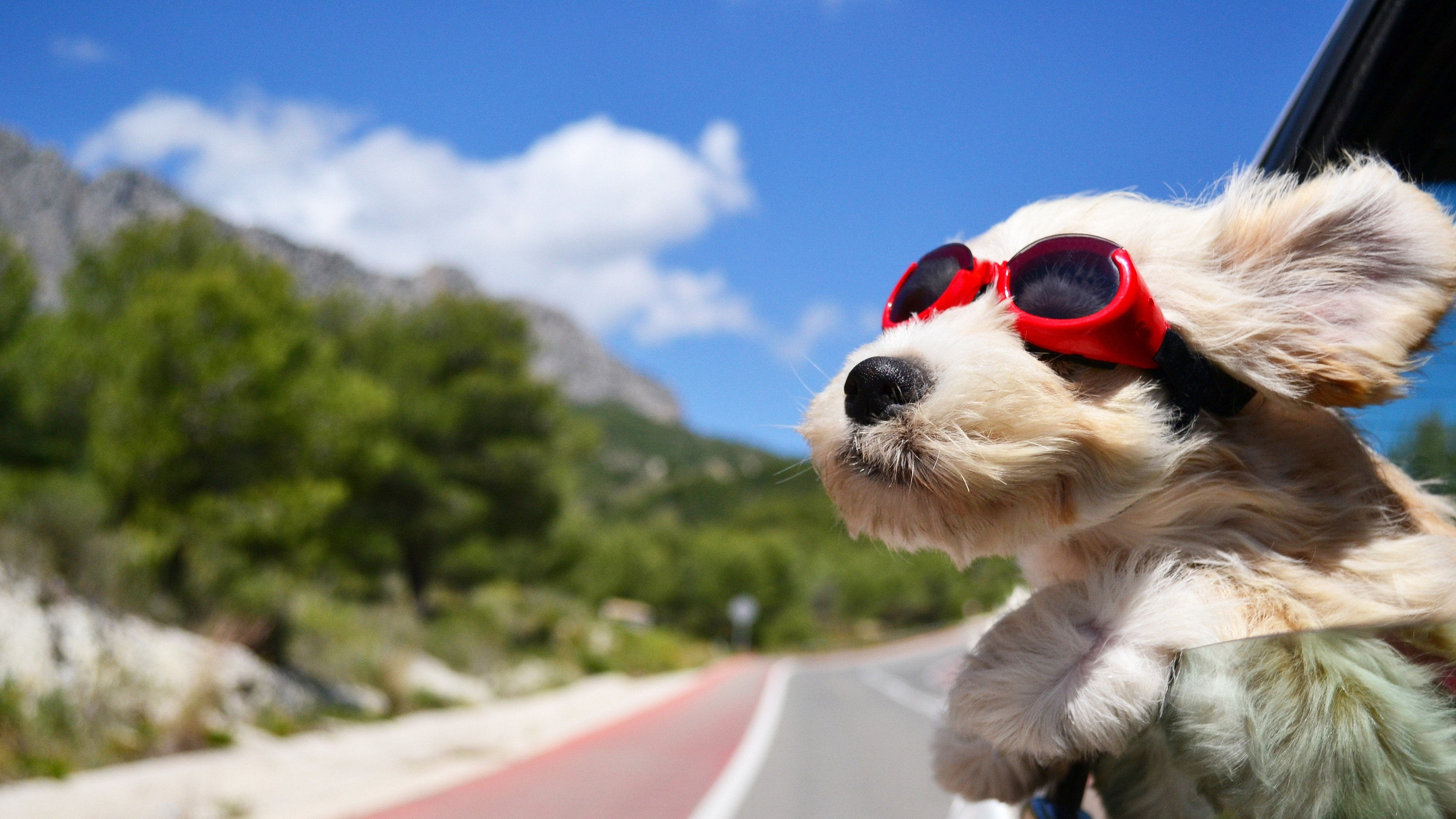 Preview wallpaper dog, face, wind, glasses 3840×2160