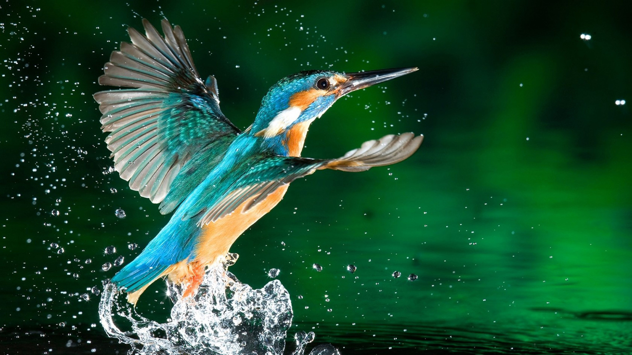 Rare animals desktop wallpaper, HD Desktop Wallpapers