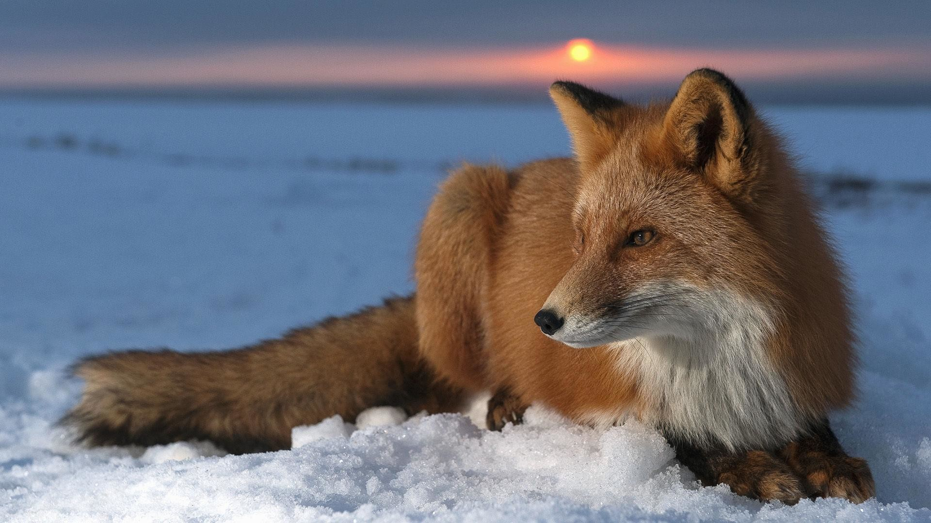 Wild-Animals-Wallpaper-HD-for-desktop