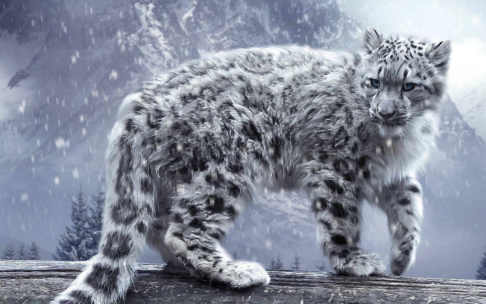 … Desktop Backgrounds Of Animals 22. Download