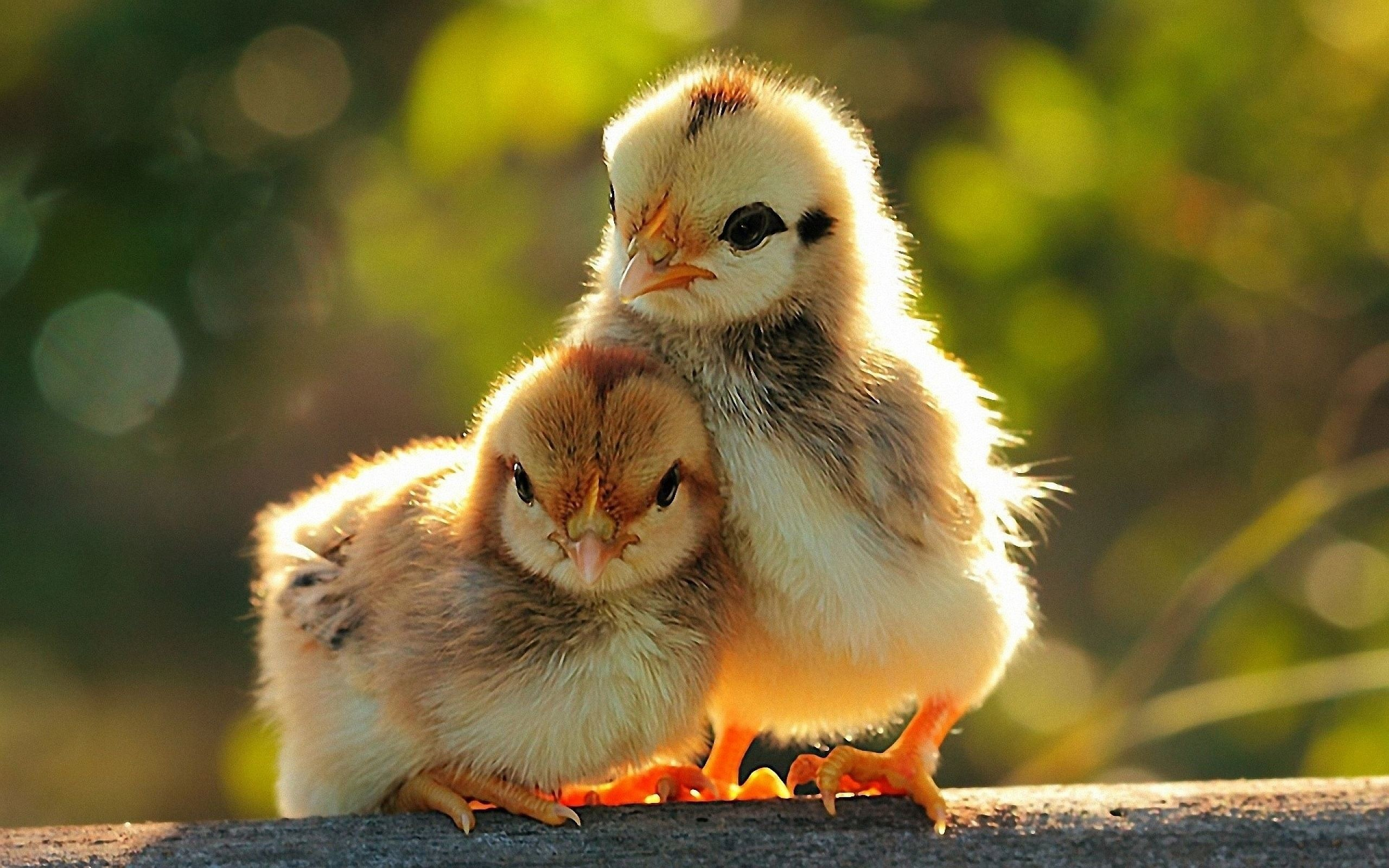 Download Beautiful And Cute Animals Wallpaper 15