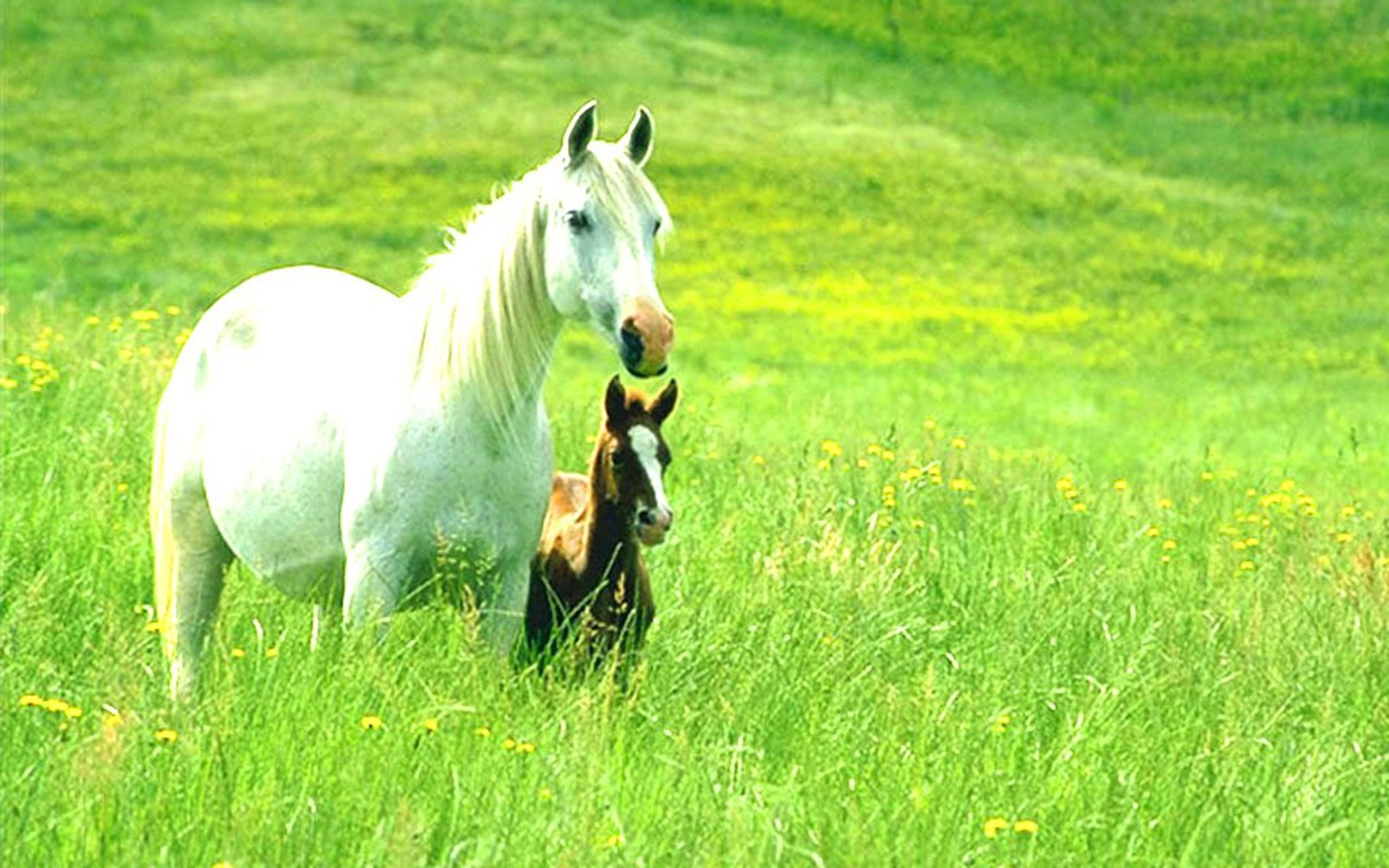 Animals. Horses and Ponies Wallpaper