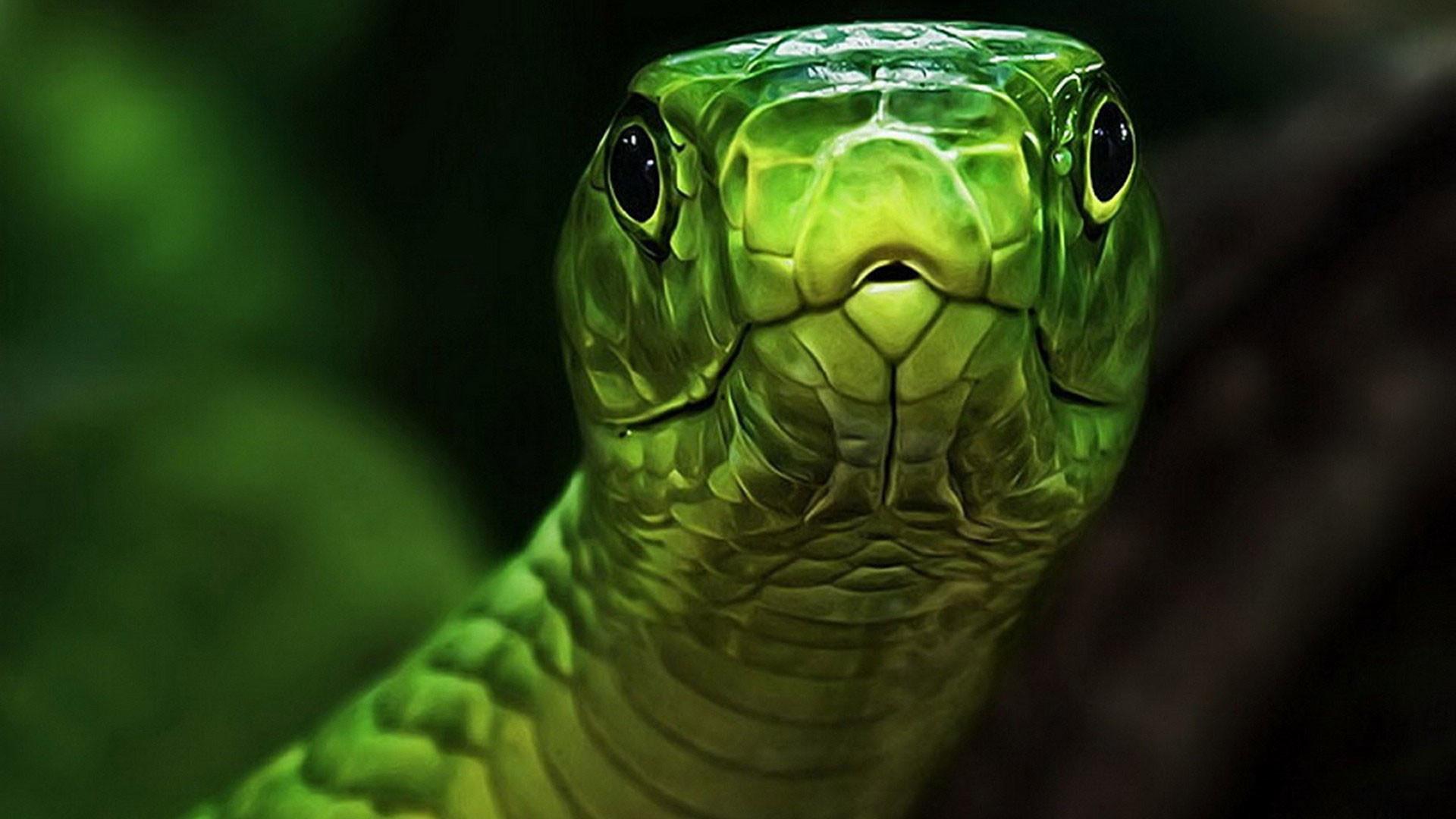 hd-pics-photos-green-snake-reptiles-nature-animals-