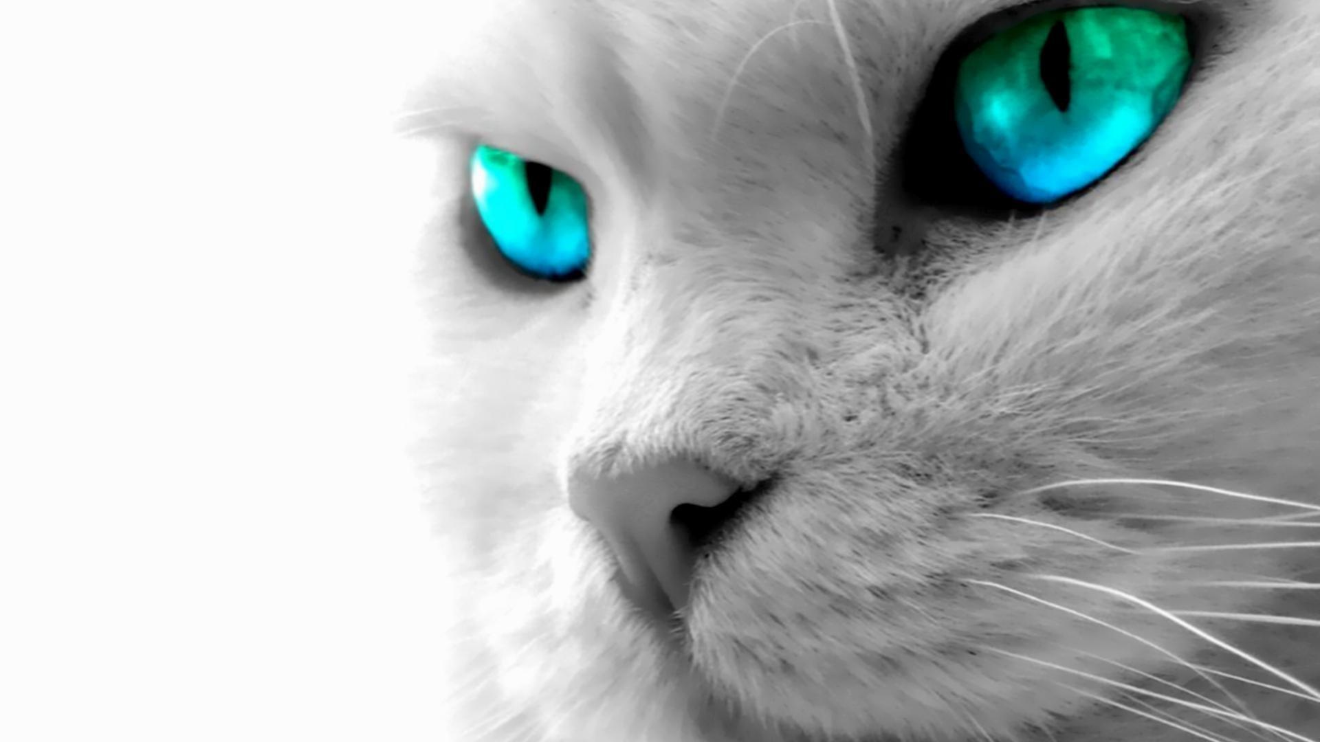 cat-desktop-wallpaper-HD5-600×338