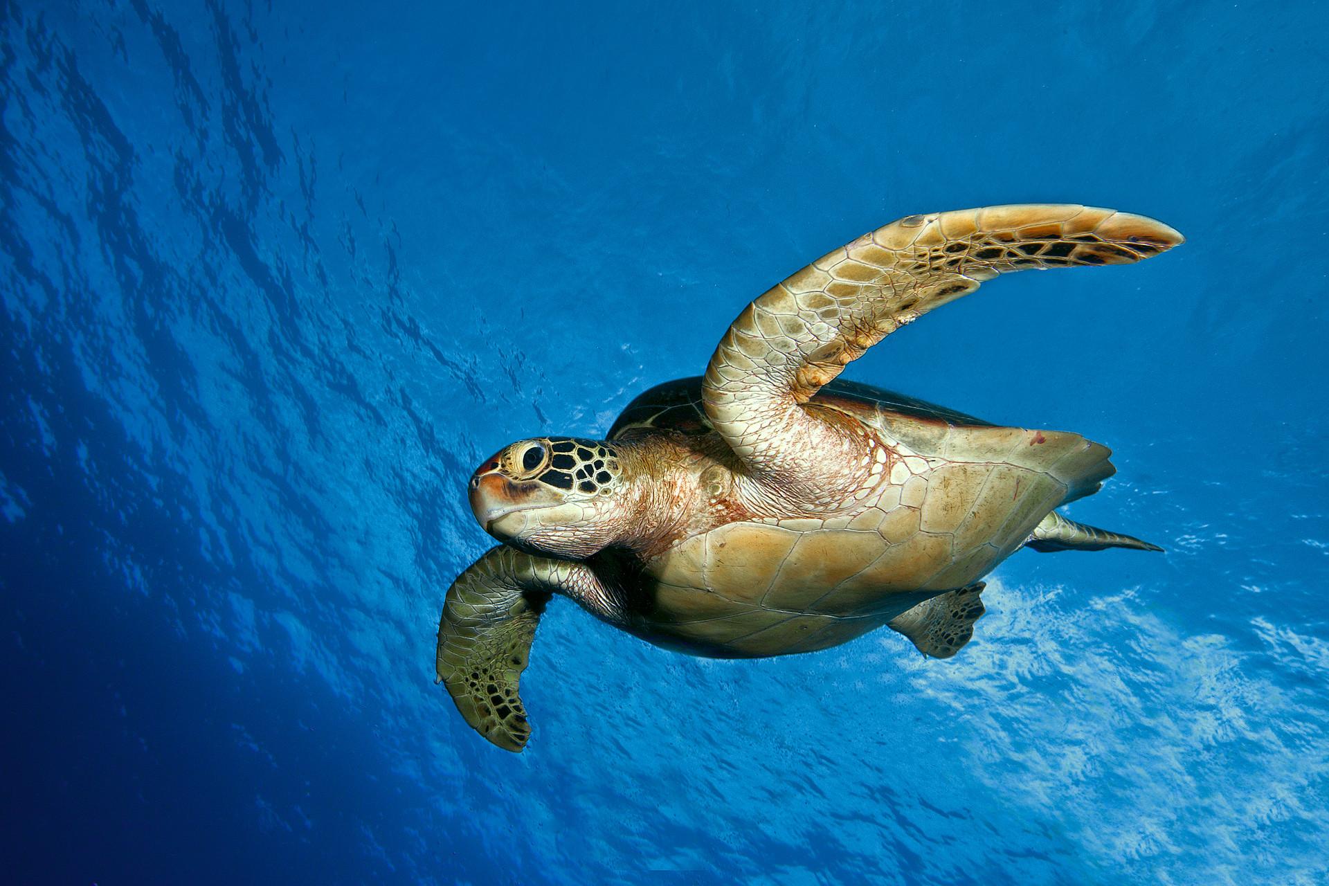 Ocean Animals Desktop Backgrounds, wallpaper, Ocean Animals Desktop .